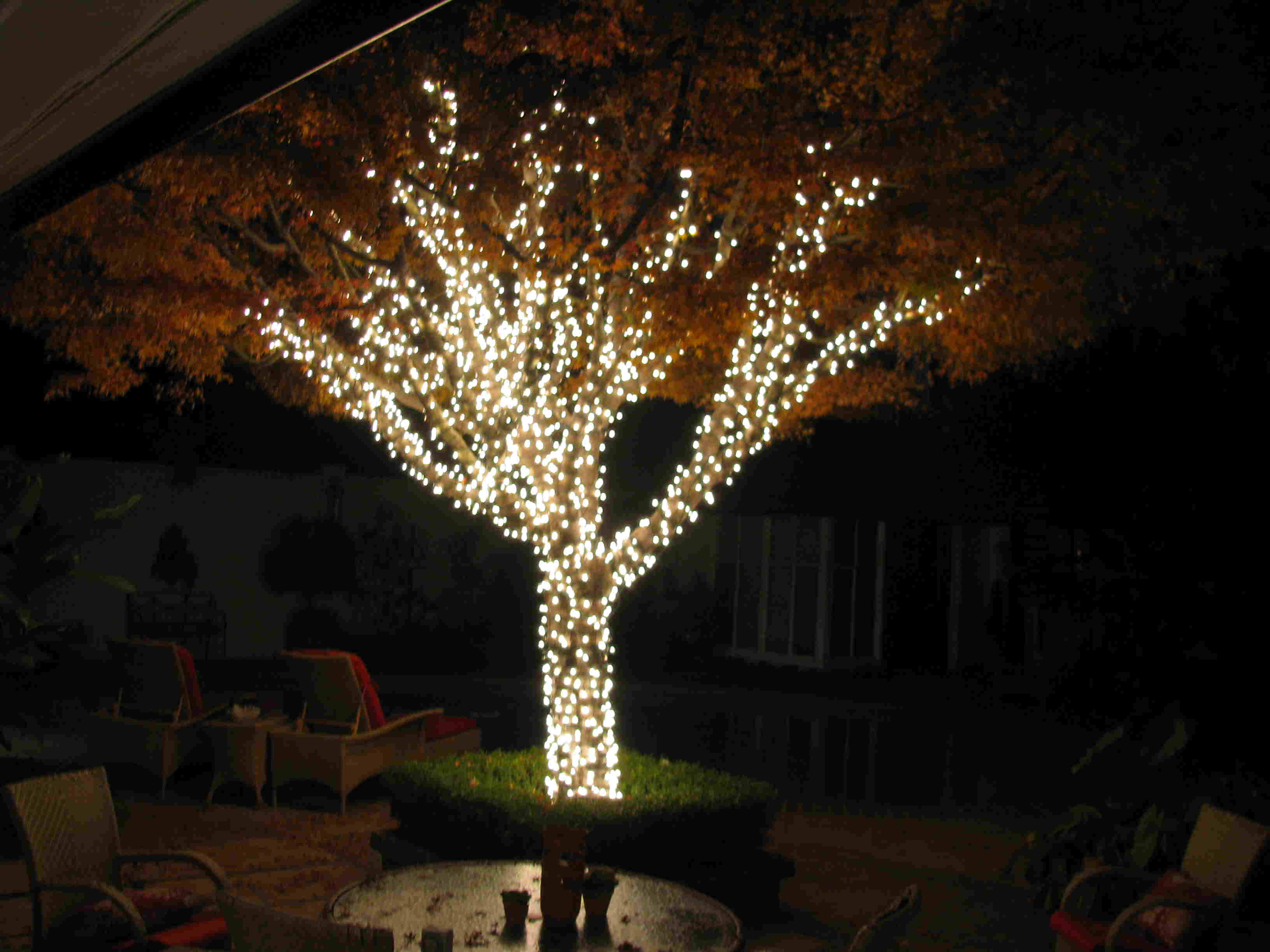 Great Outdoor Lights On Trees Place Guide @house2homegoods.net