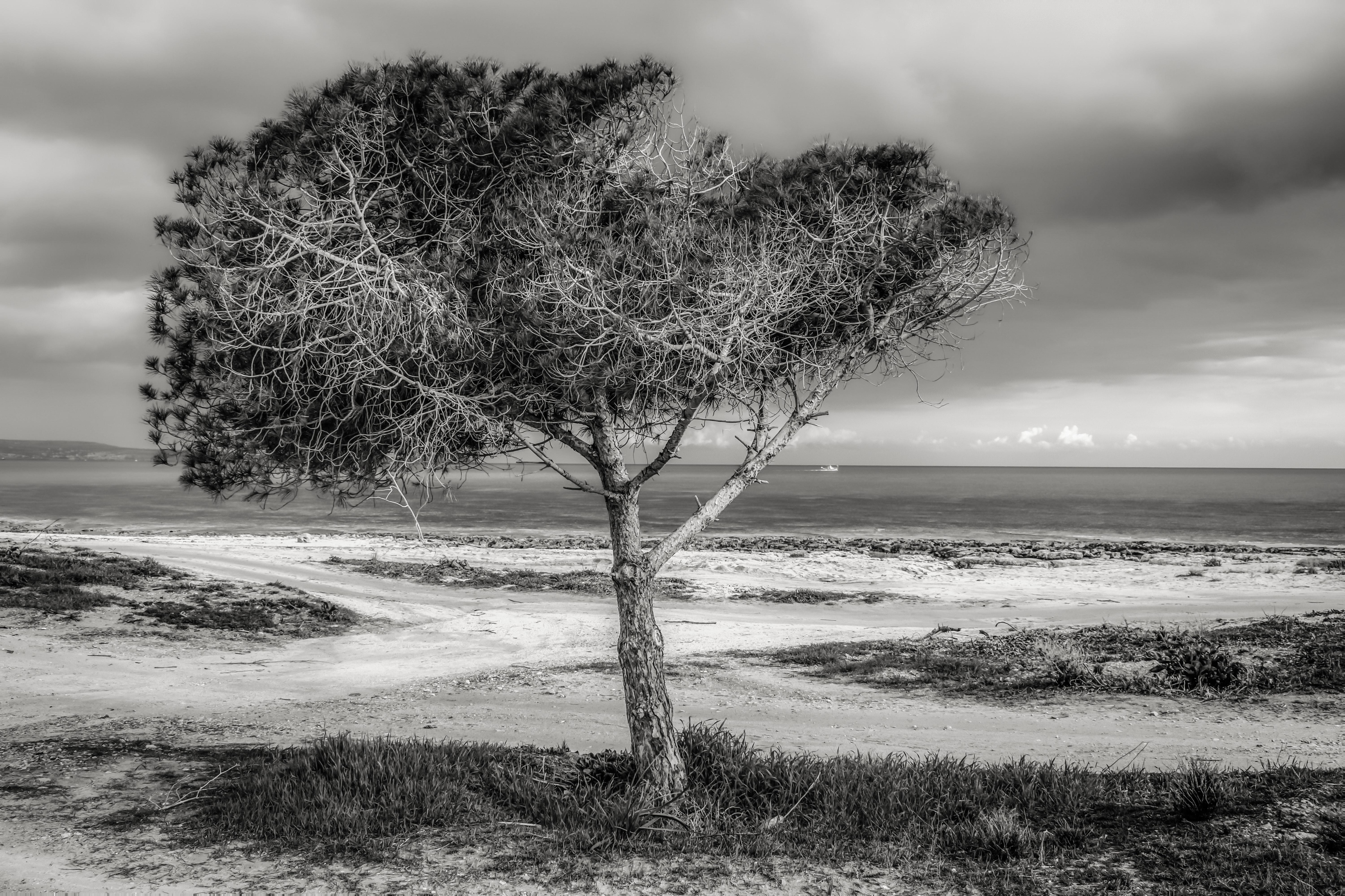 Tree on beach against sky photo