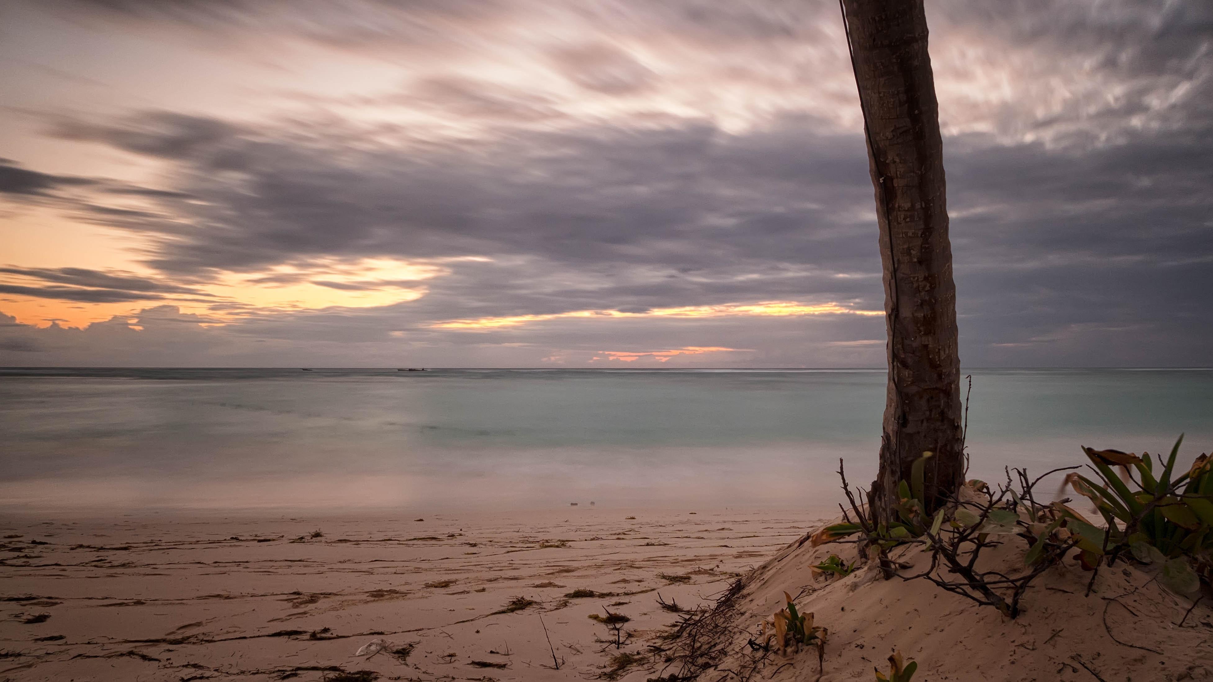 Tree on sand near body of water photo