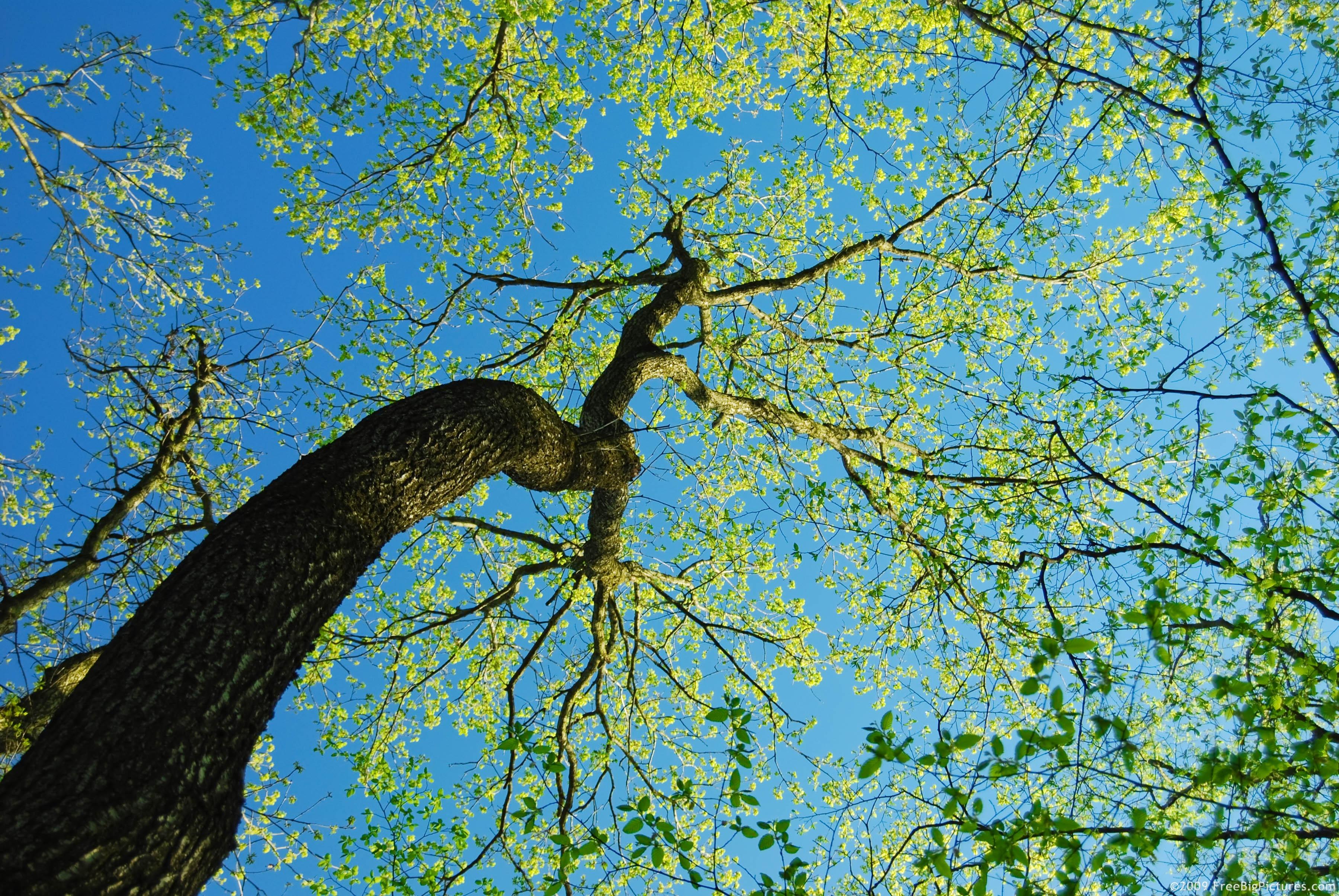 Free Photo Tree On Sky Blue Con0207 Sky Free Download Jooinn
