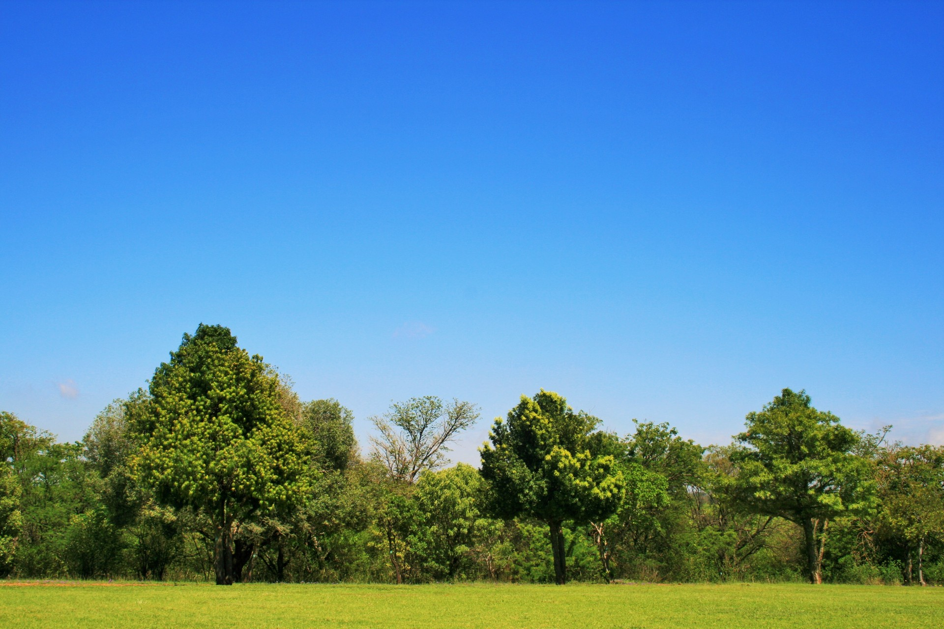 Trees, Lawn And Sky Free Stock Photo - Public Domain Pictures