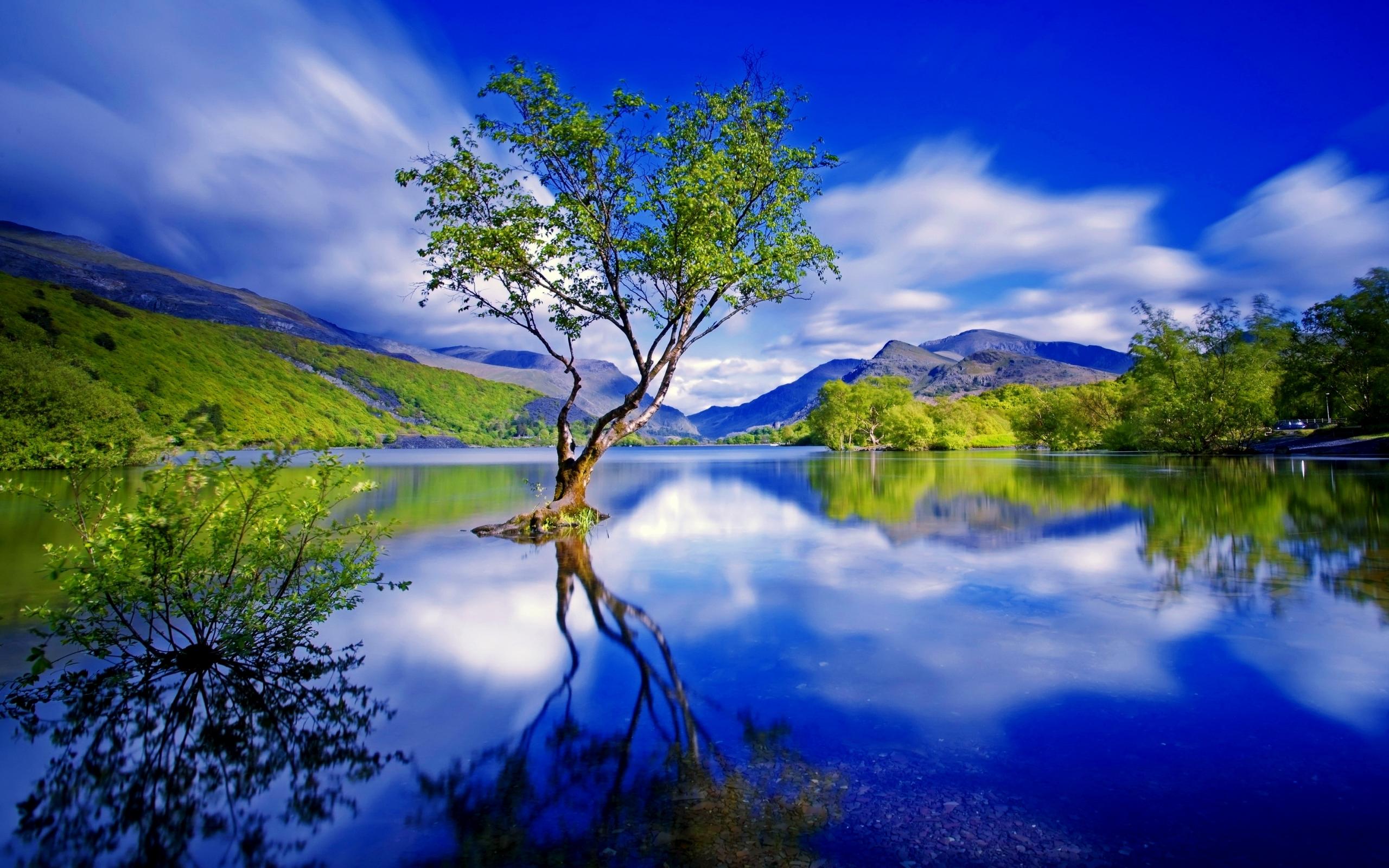 Free photo: Tree Reflection - Lake, Lonely, Mirror - Free ...