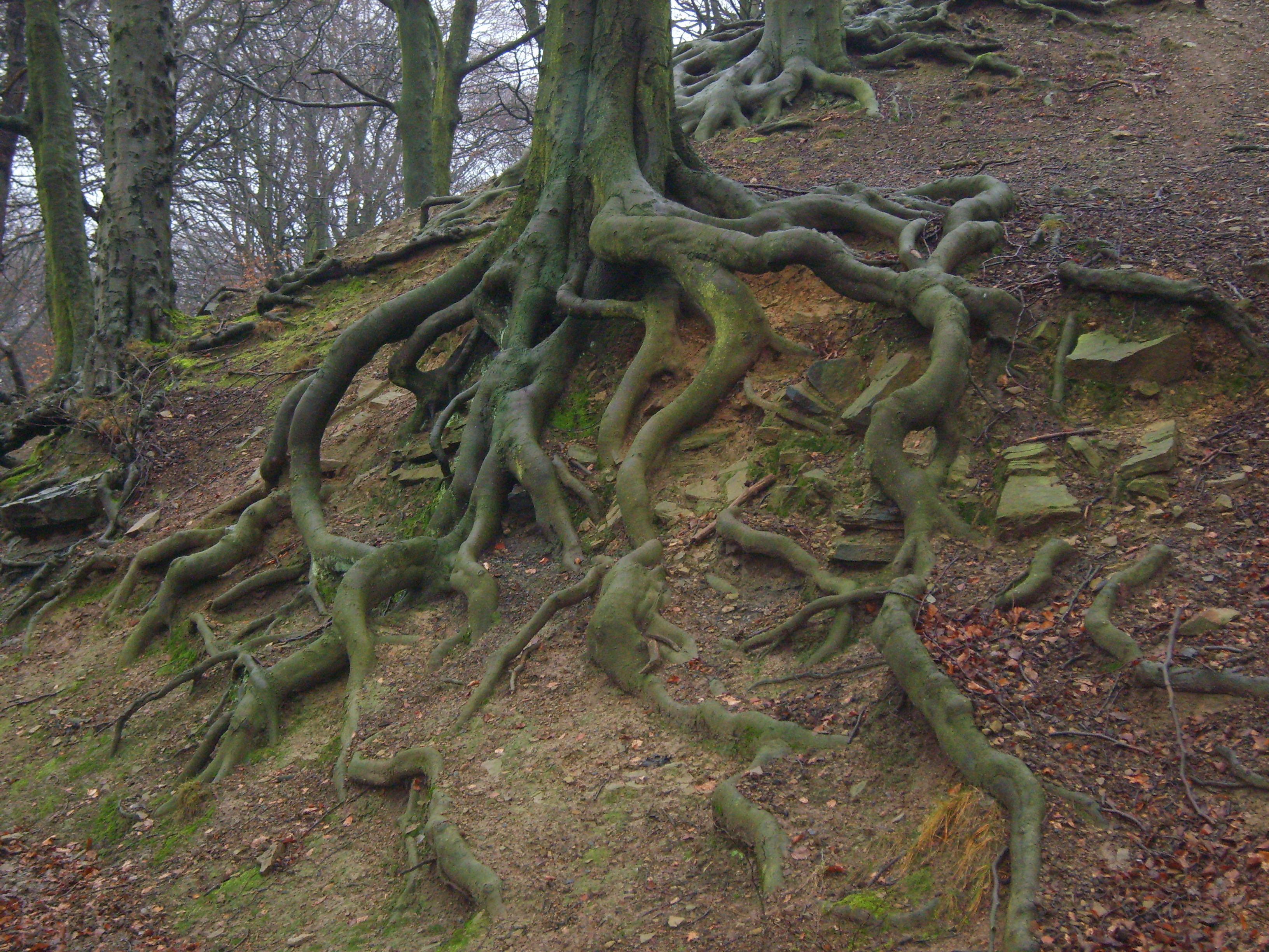 Tree Roots by PaulineMoss on DeviantArt