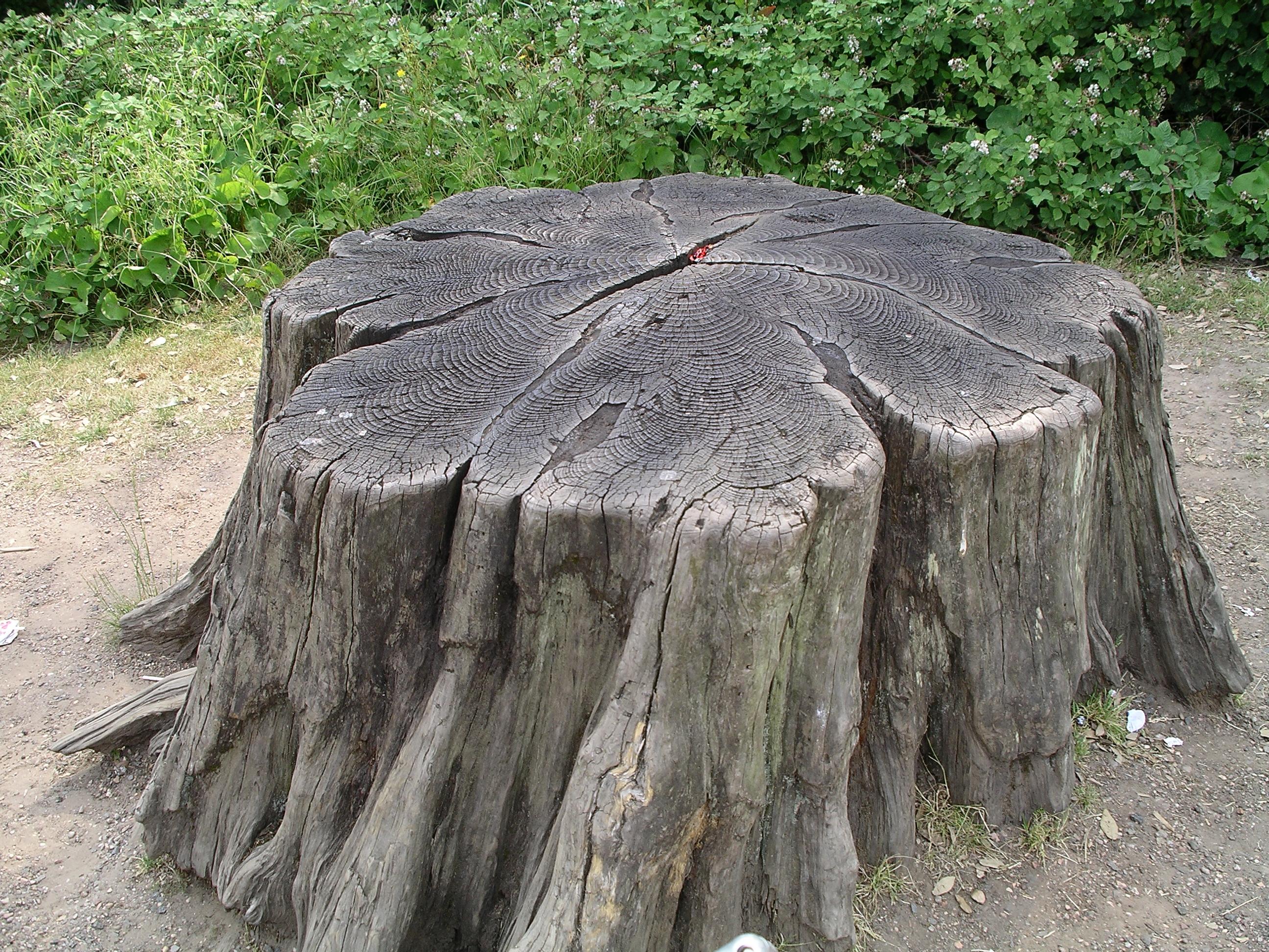 4 Sure Fire Ways to Remove A Tree Stump   KG Landscape Management