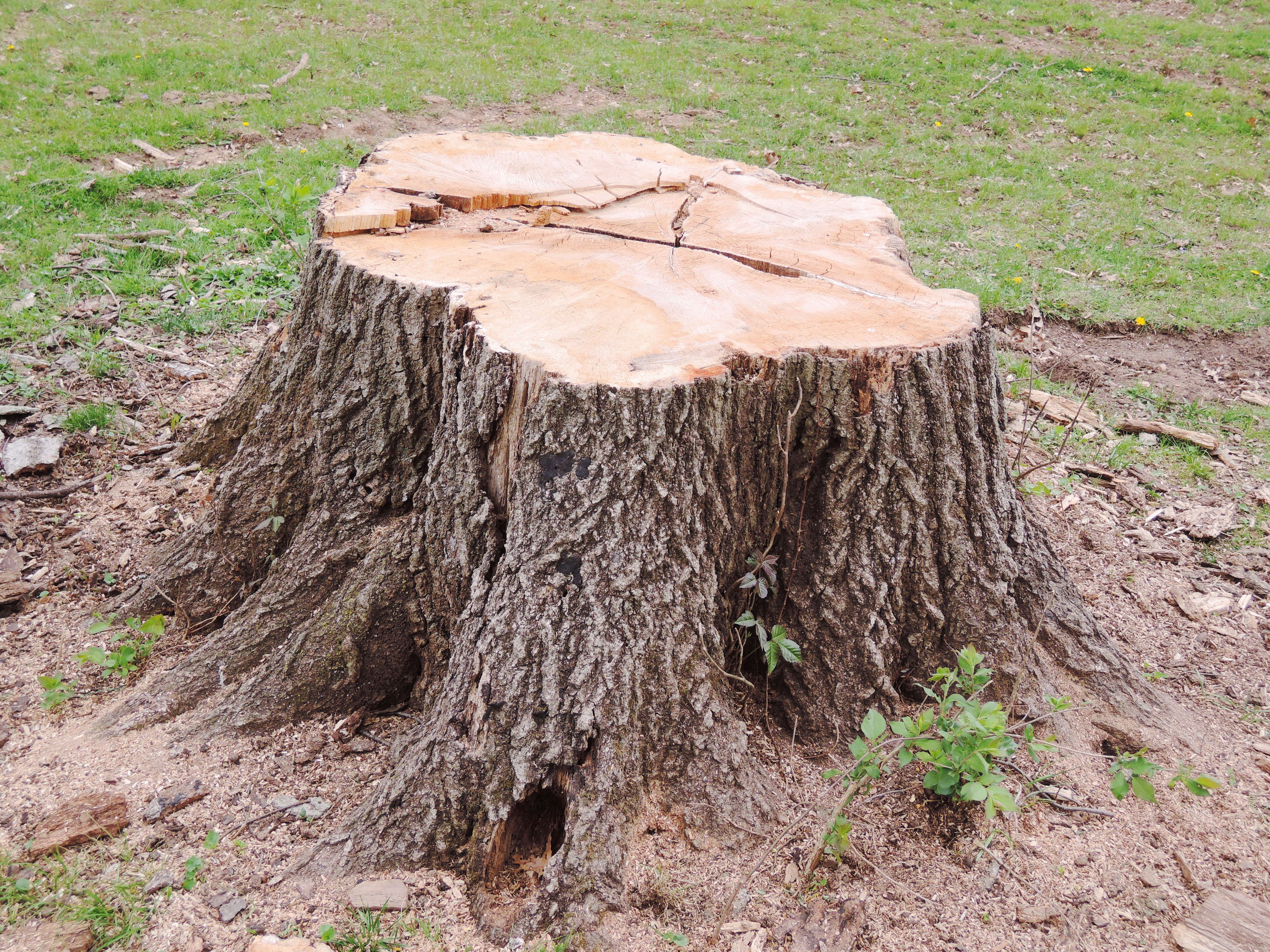 Tree Stump: How to Get It Removed?