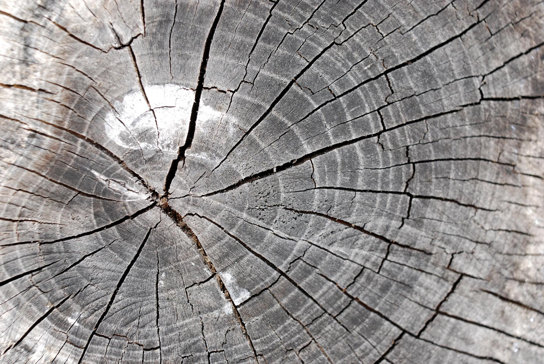 free photo tree stump texture split radial stump free