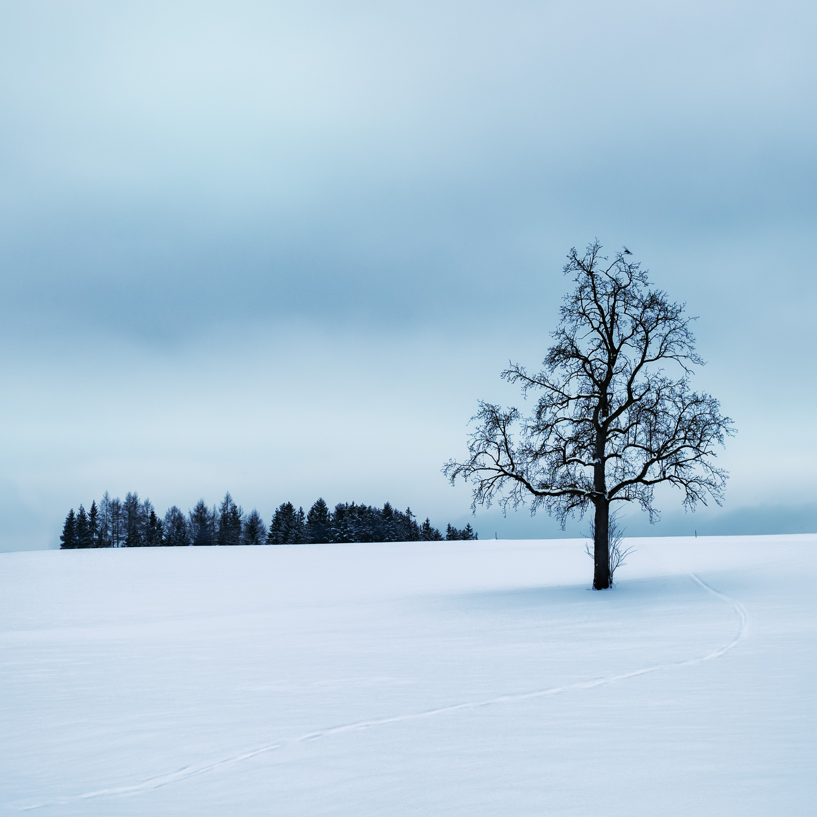 Tree surrounded by snow photo