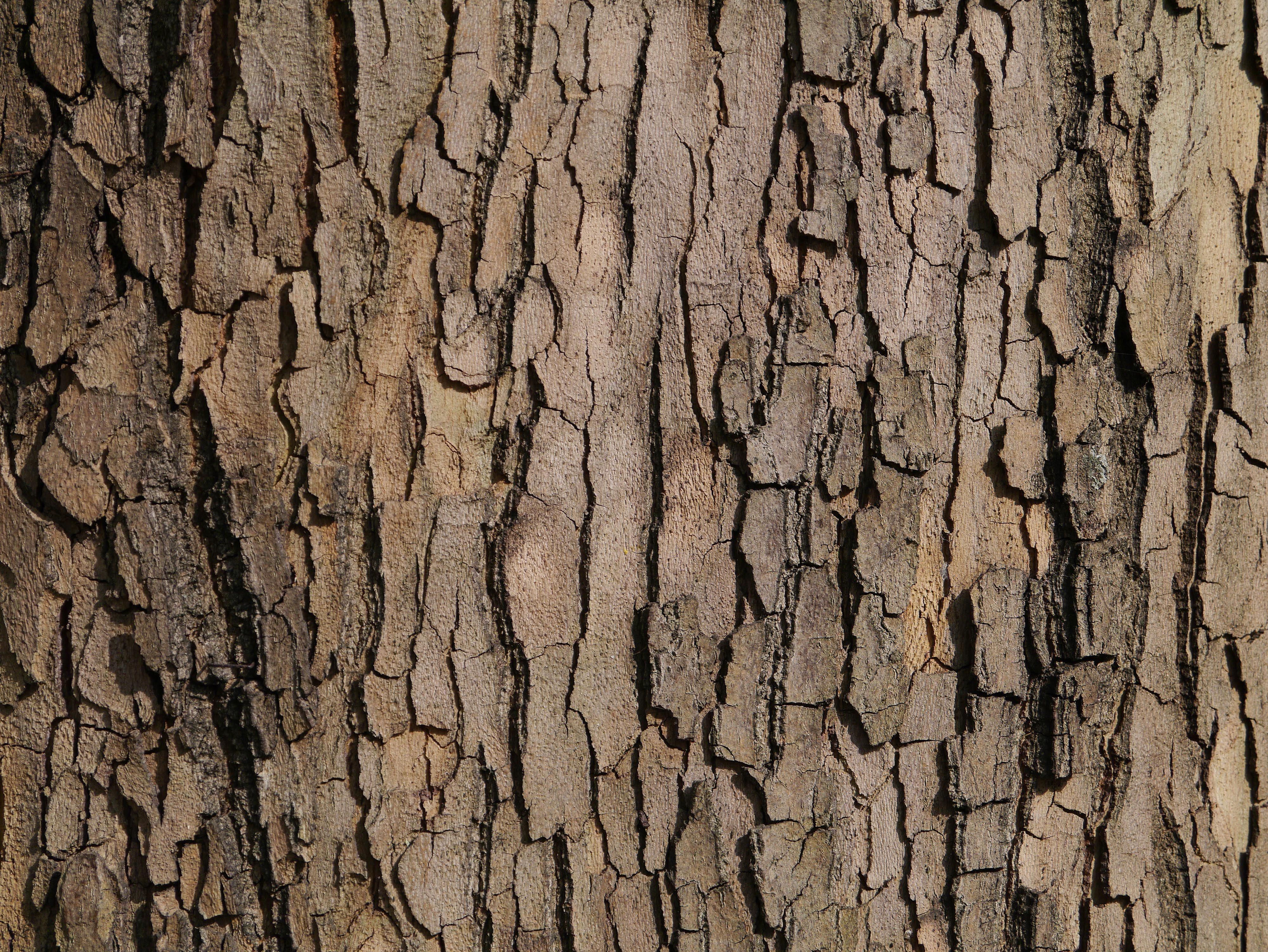 Realistic Bark Texture | Texture | Pinterest