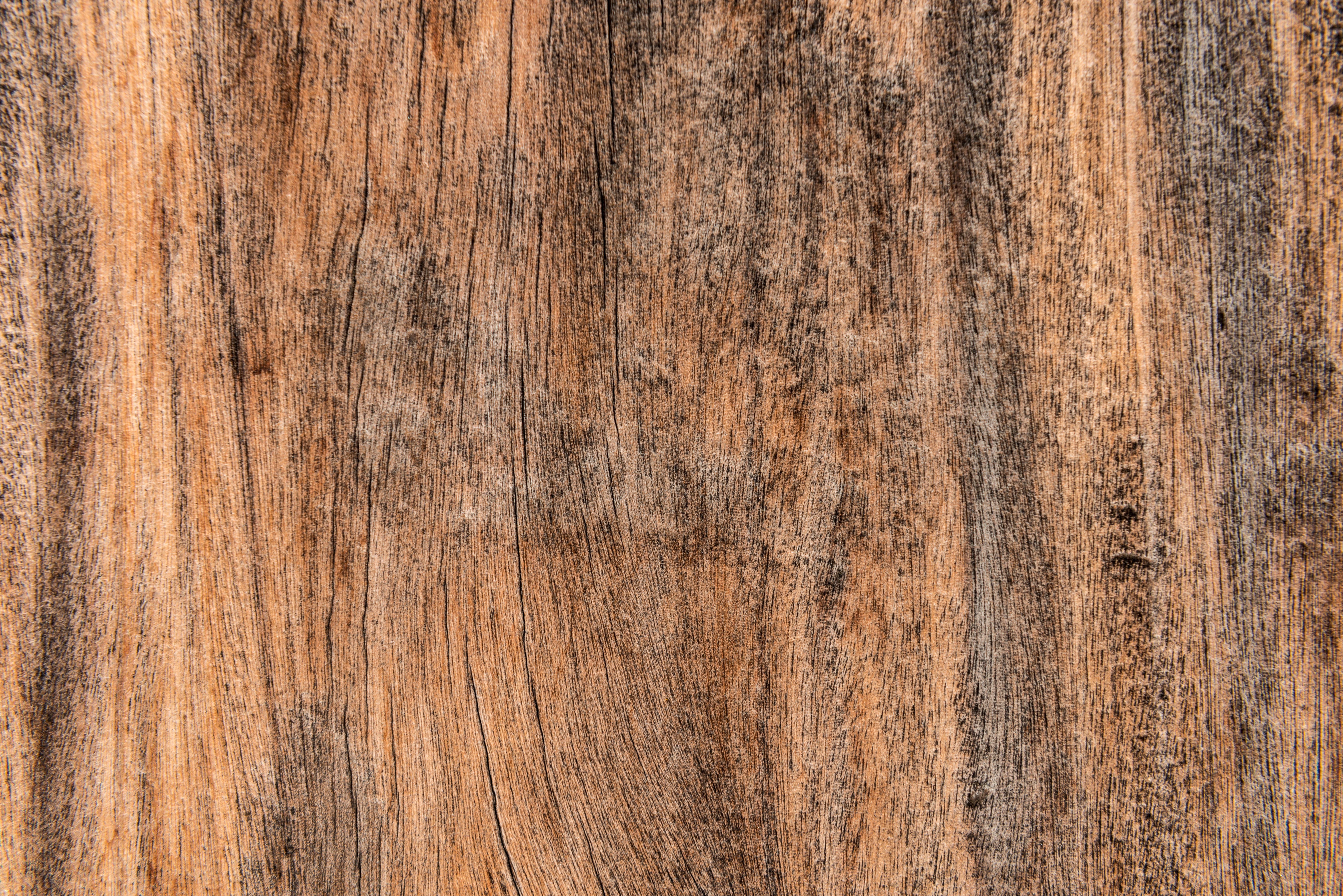 tree texture, tree texture