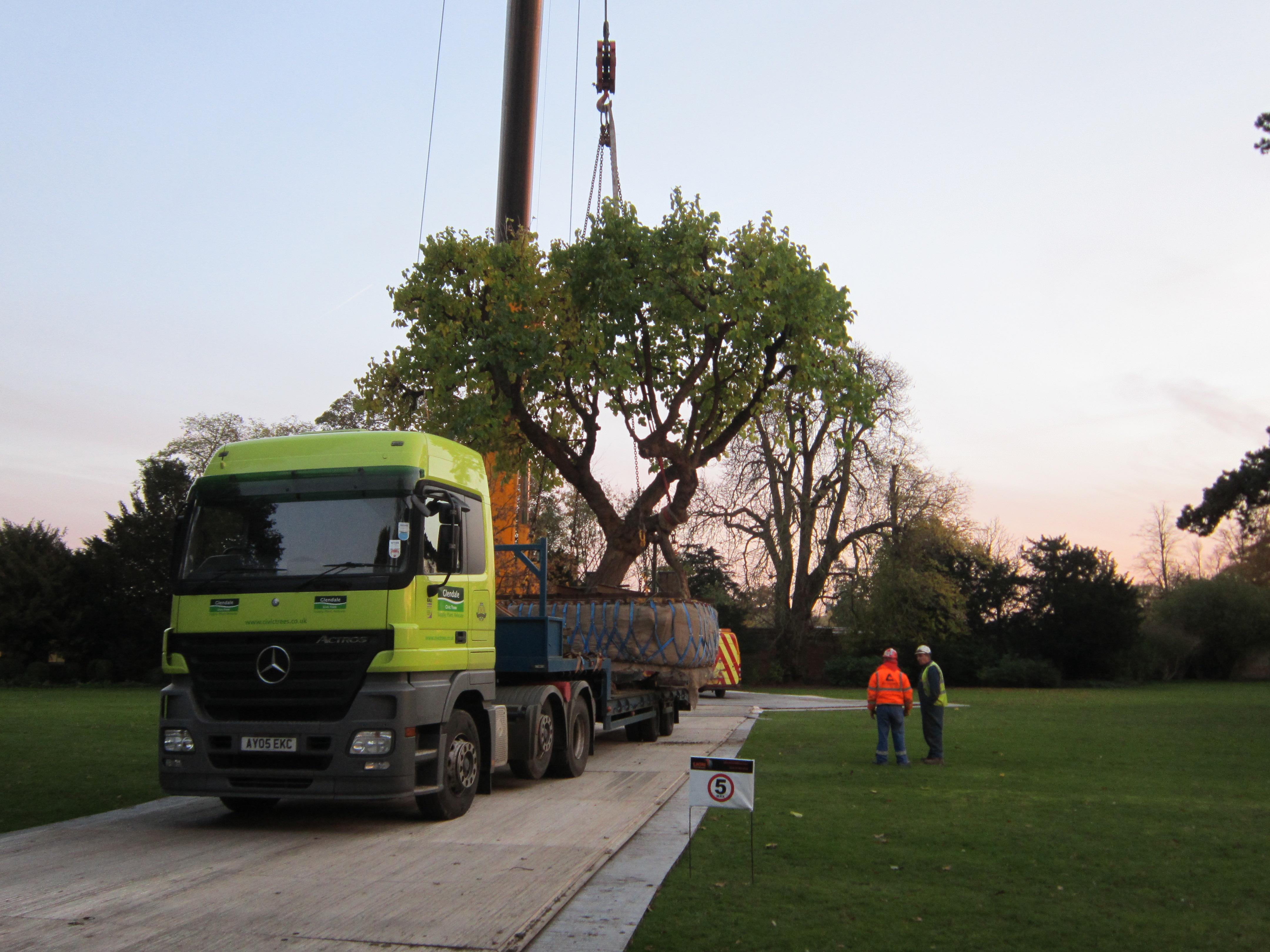 Tree Relocation - Civic Trees