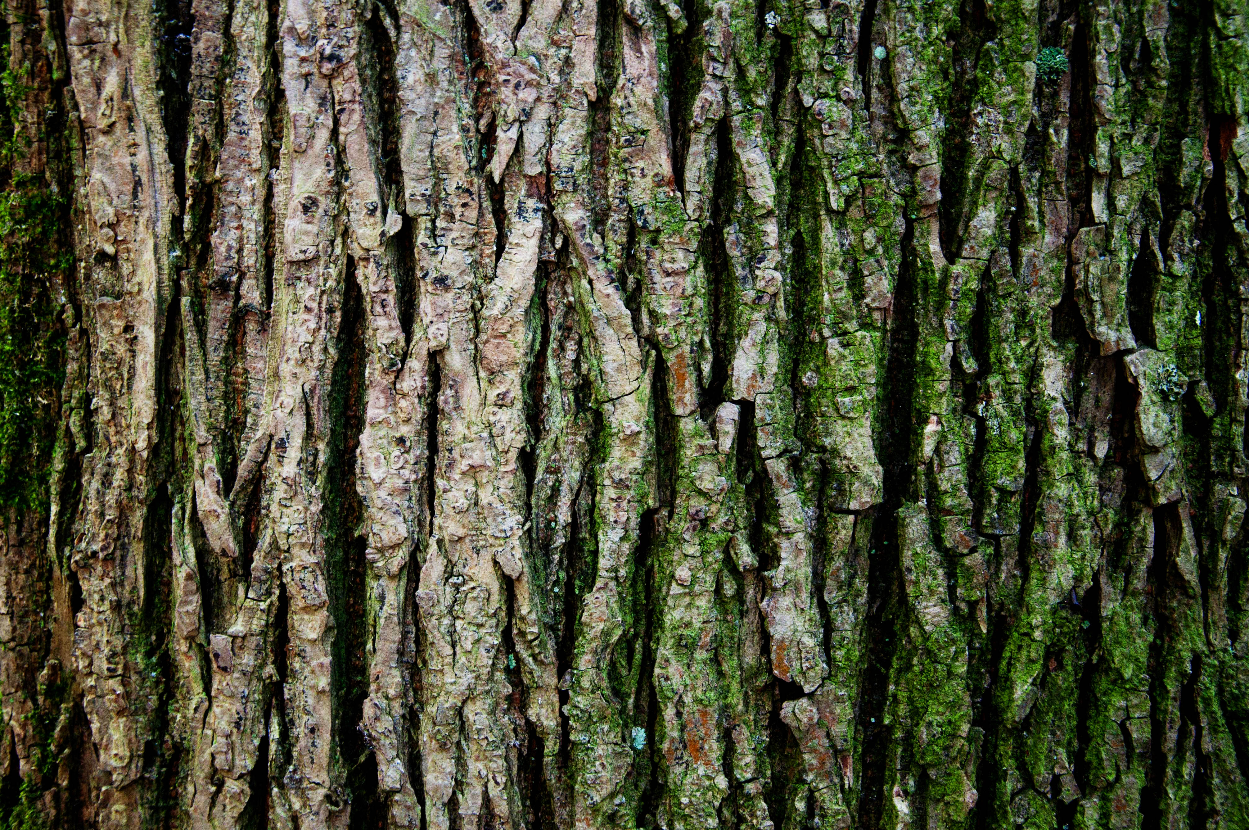 Tree trunk texture, Abstract, Timber, Wood, Wallpaper, HQ Photo