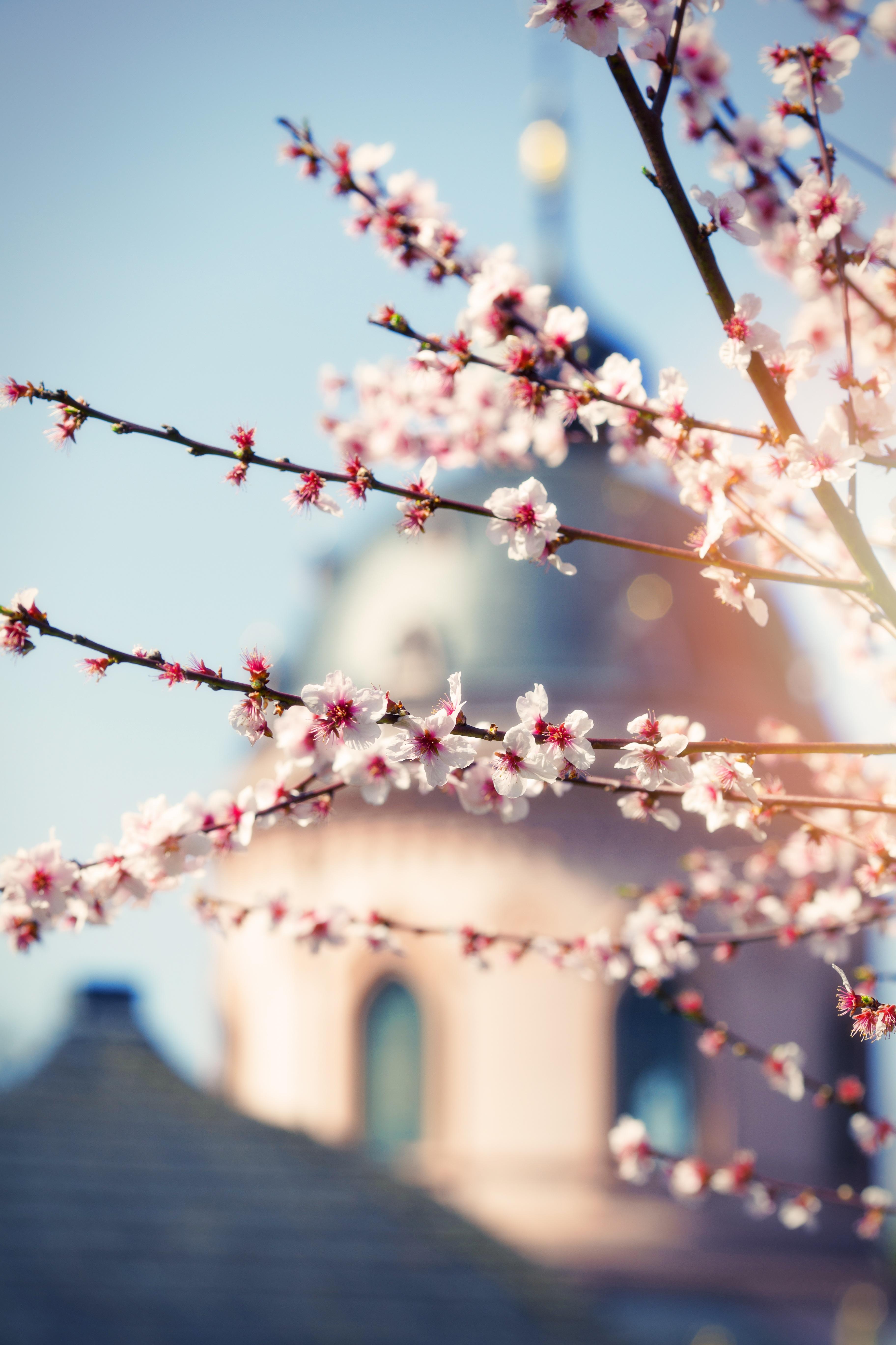 Tree, Flower, Fresh, Freshness, Nature, HQ Photo