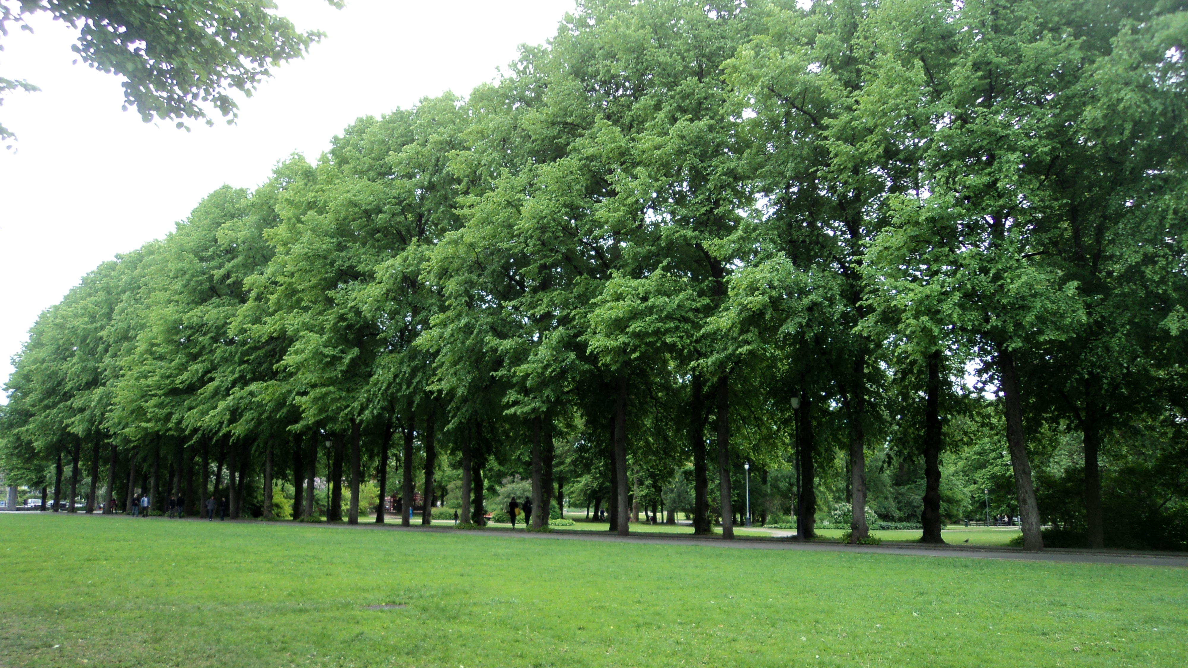 File:Frogner Park Trees.JPG - Wikimedia Commons