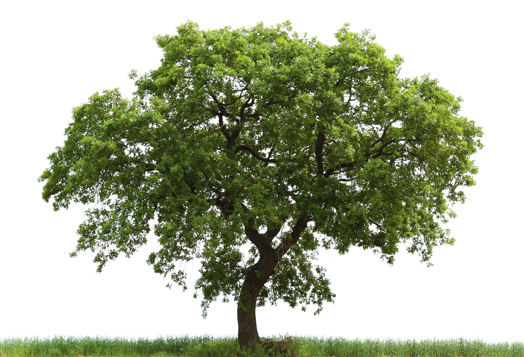 Trees of Life – Sustainable Development and Biodiversity Protection ...
