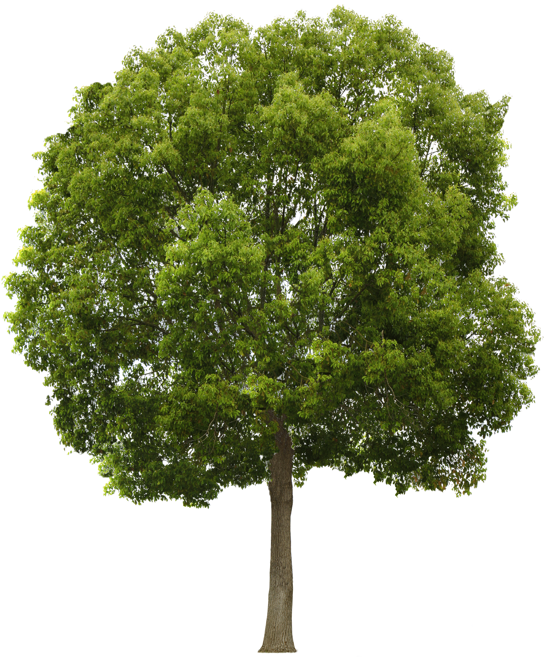 Image result for tree | Trees | Pinterest | Tree psd, Master plan ...