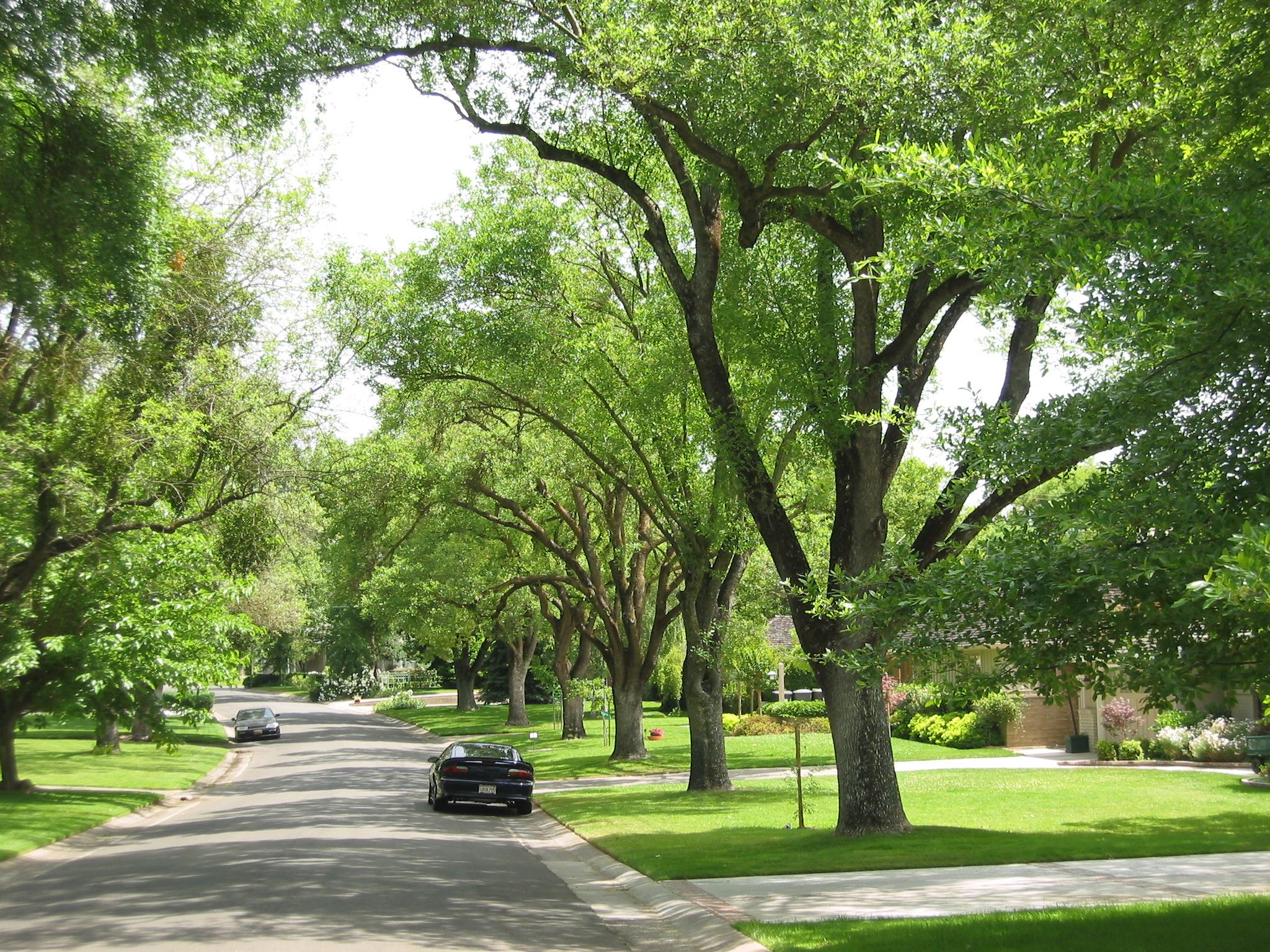 How to Volunteer Articles - Sacramento Tree Foundation