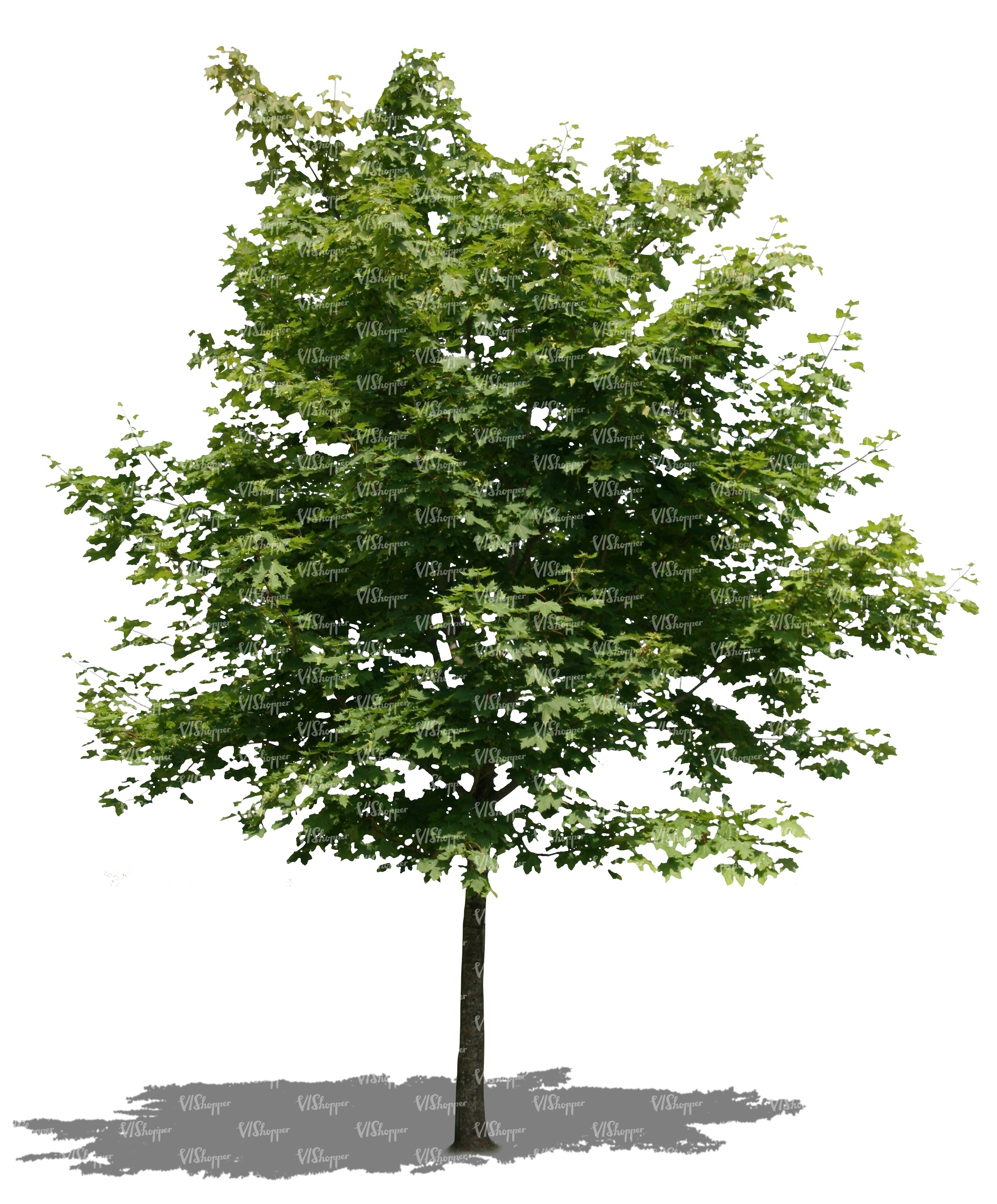 cut out little maple tree - cut out trees and plants - VIShopper
