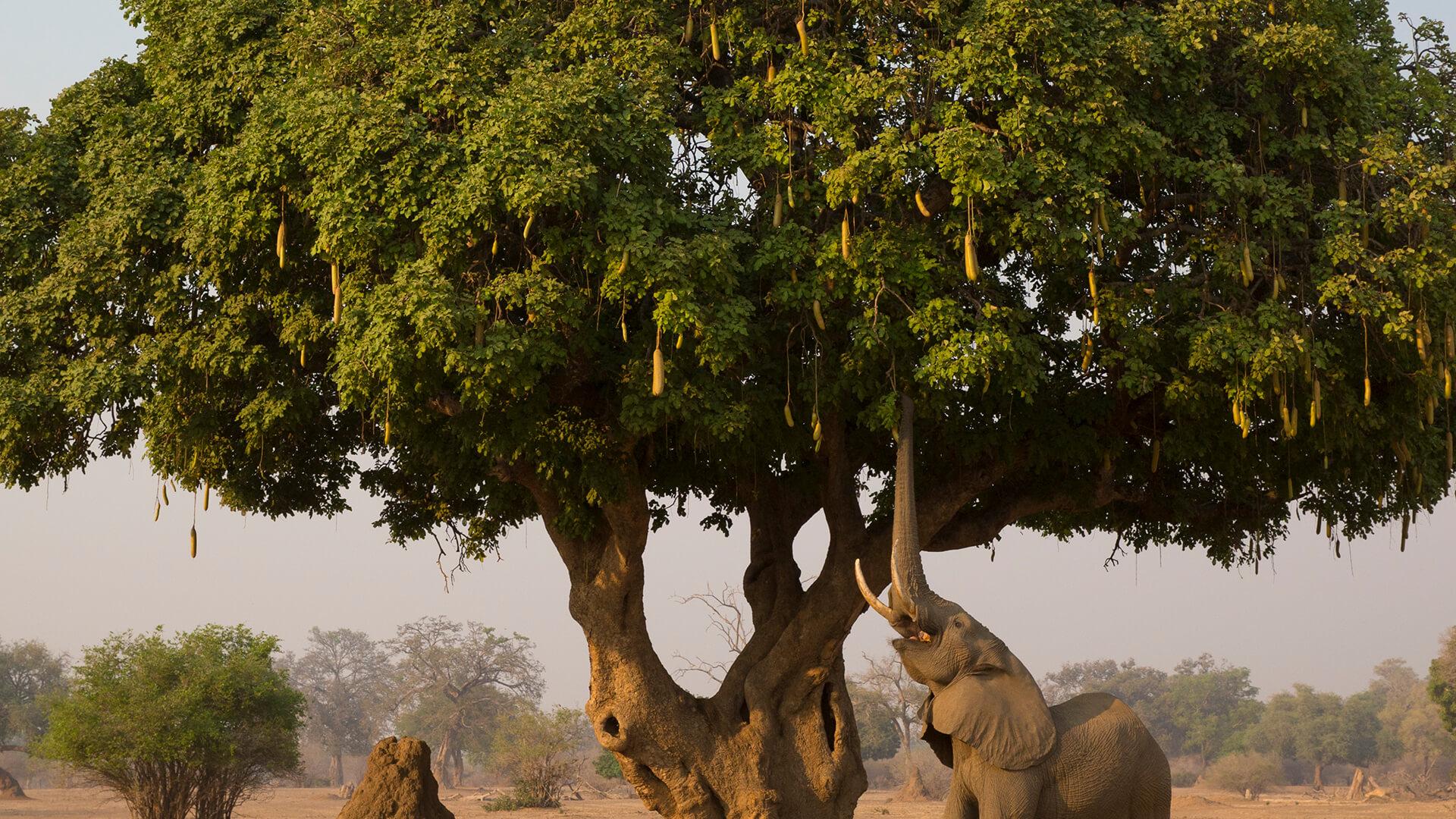 Trees   San Diego Zoo Animals & Plants