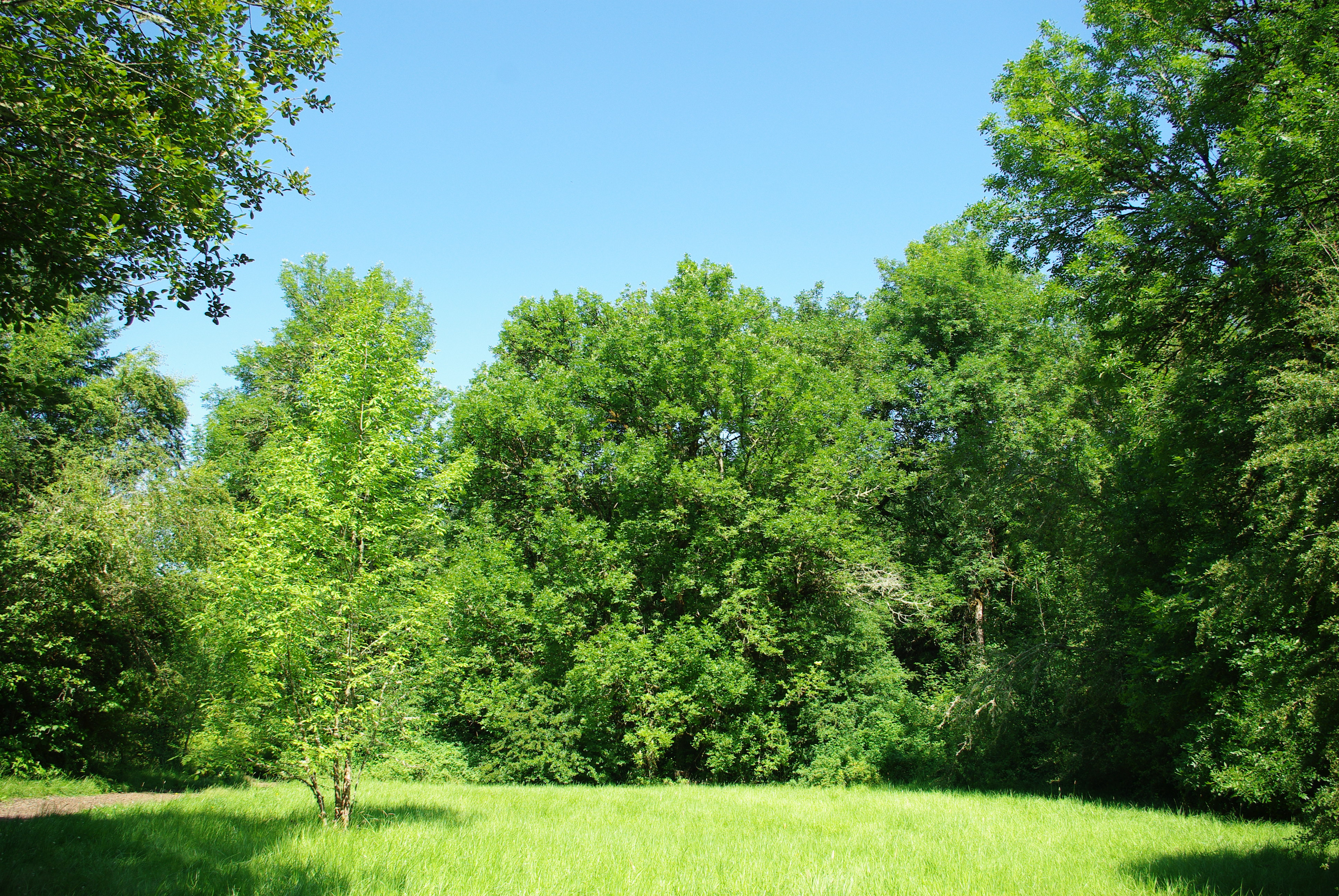 File:Meadow and trees at Noble Woods Park - Hillsboro, Oregon.JPG ...