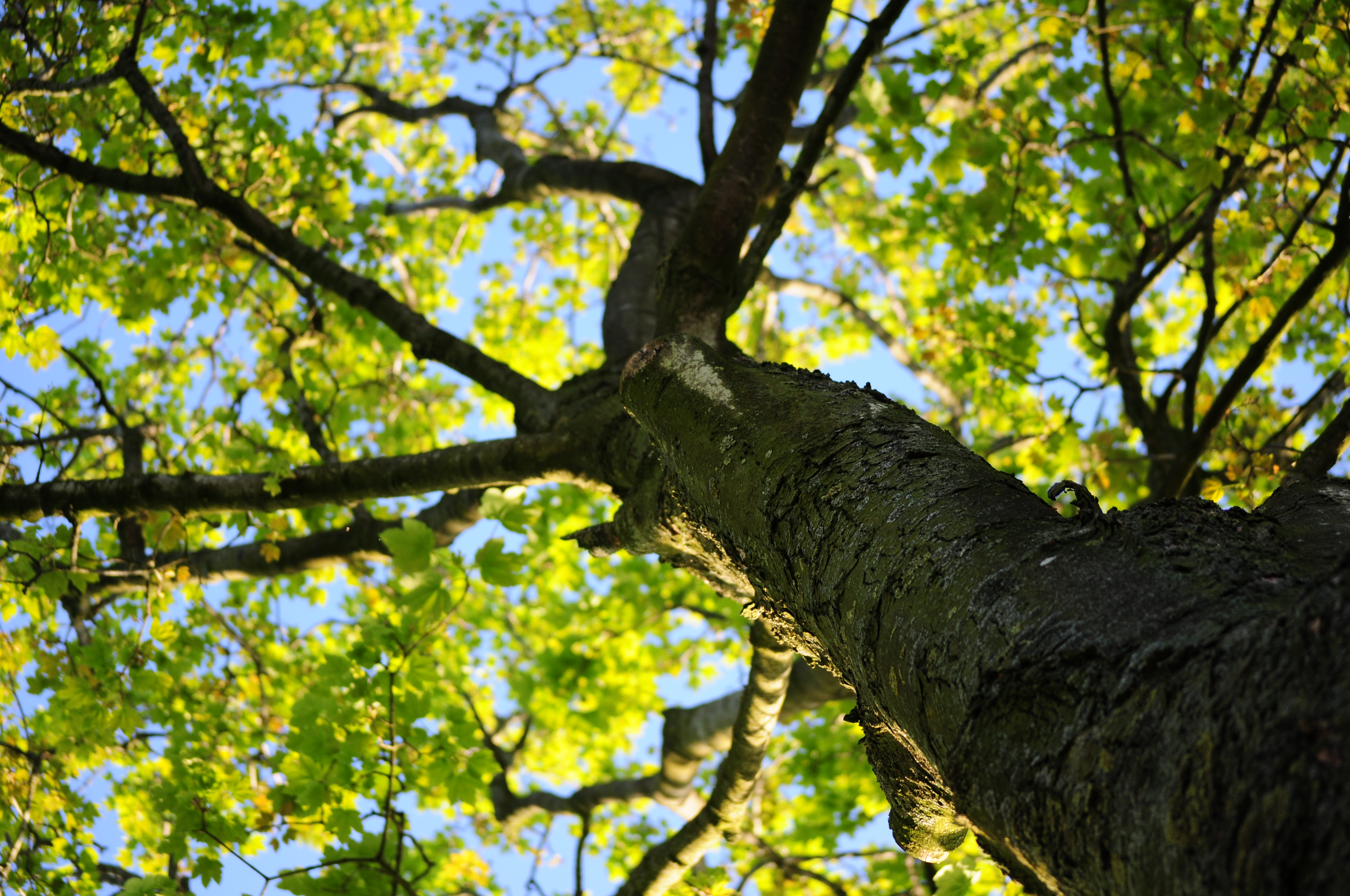 Plant a Tree to Increase Property Values