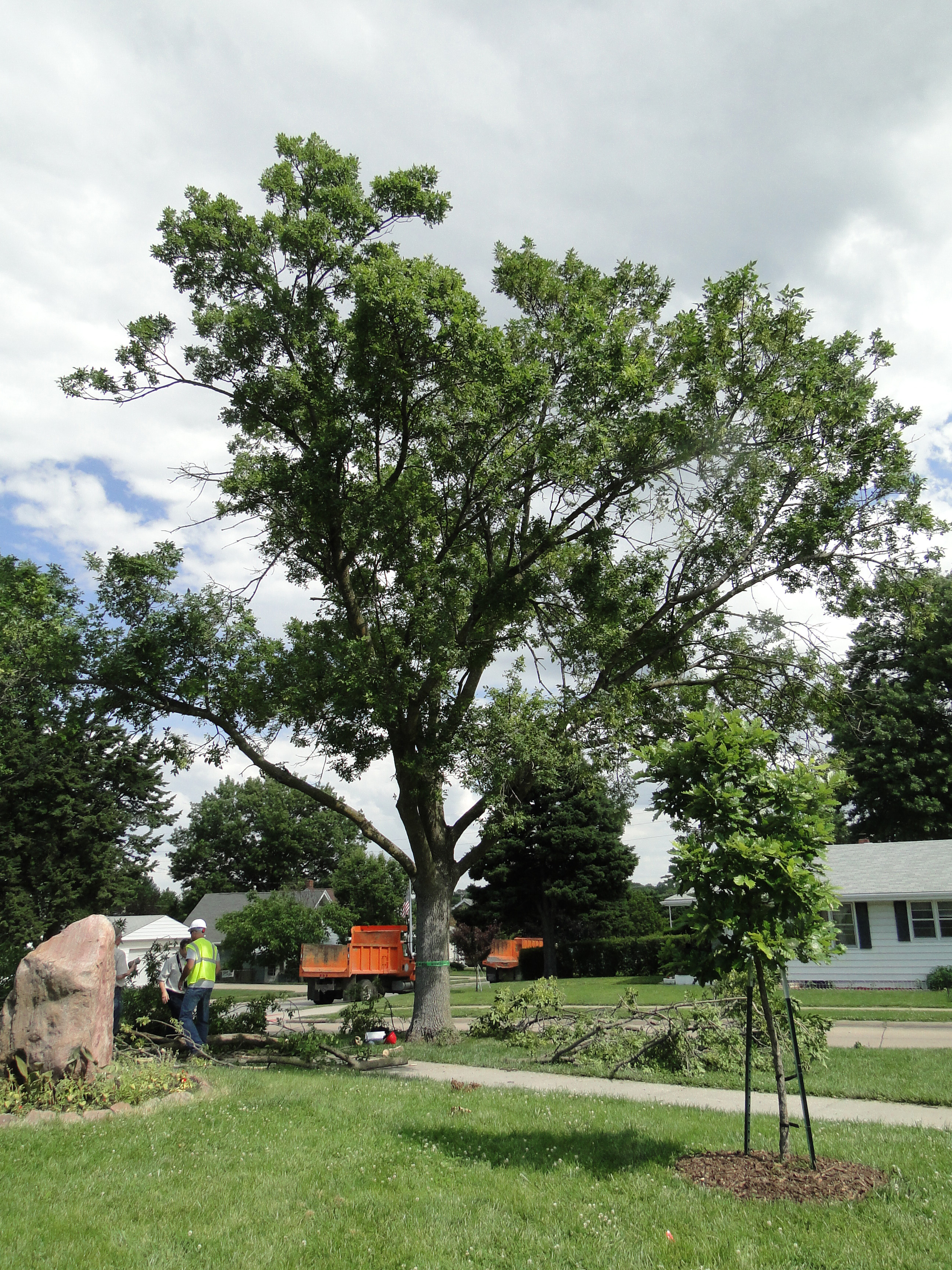 UNL experts offer advice on protecting ash trees   IANR News