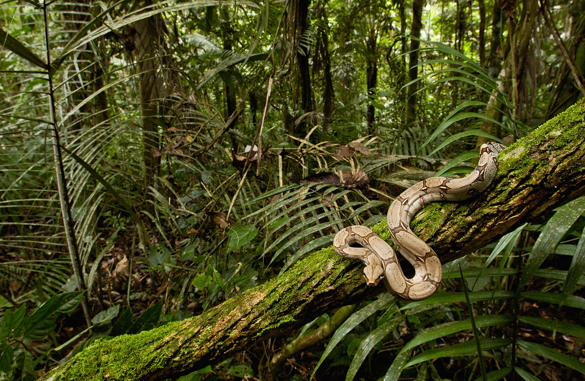 Mystery Solved: How Snakes Climb Trees – National Geographic Blog