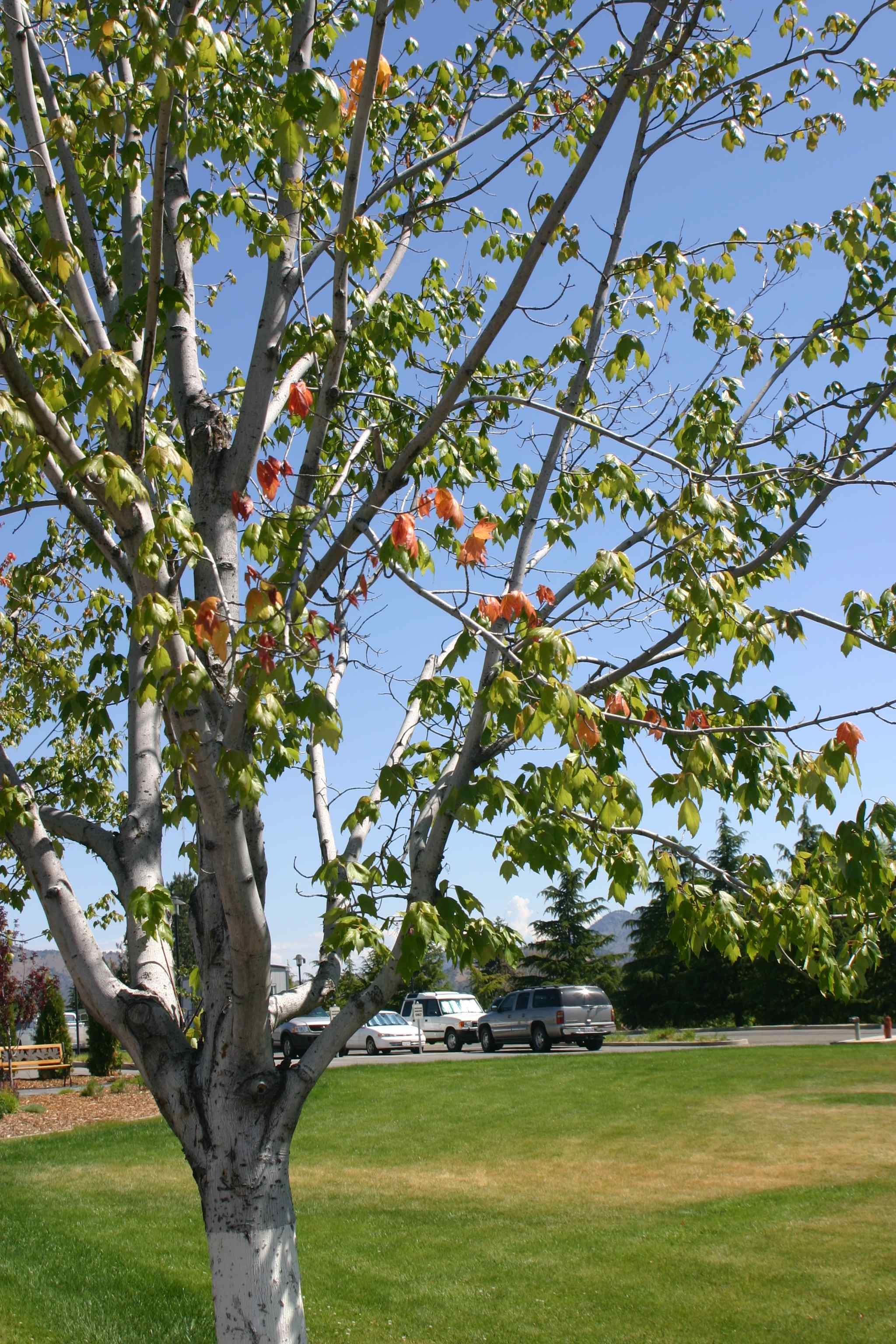 Save Trees during Drought with New Tree Ring Irrigation Contraption ...