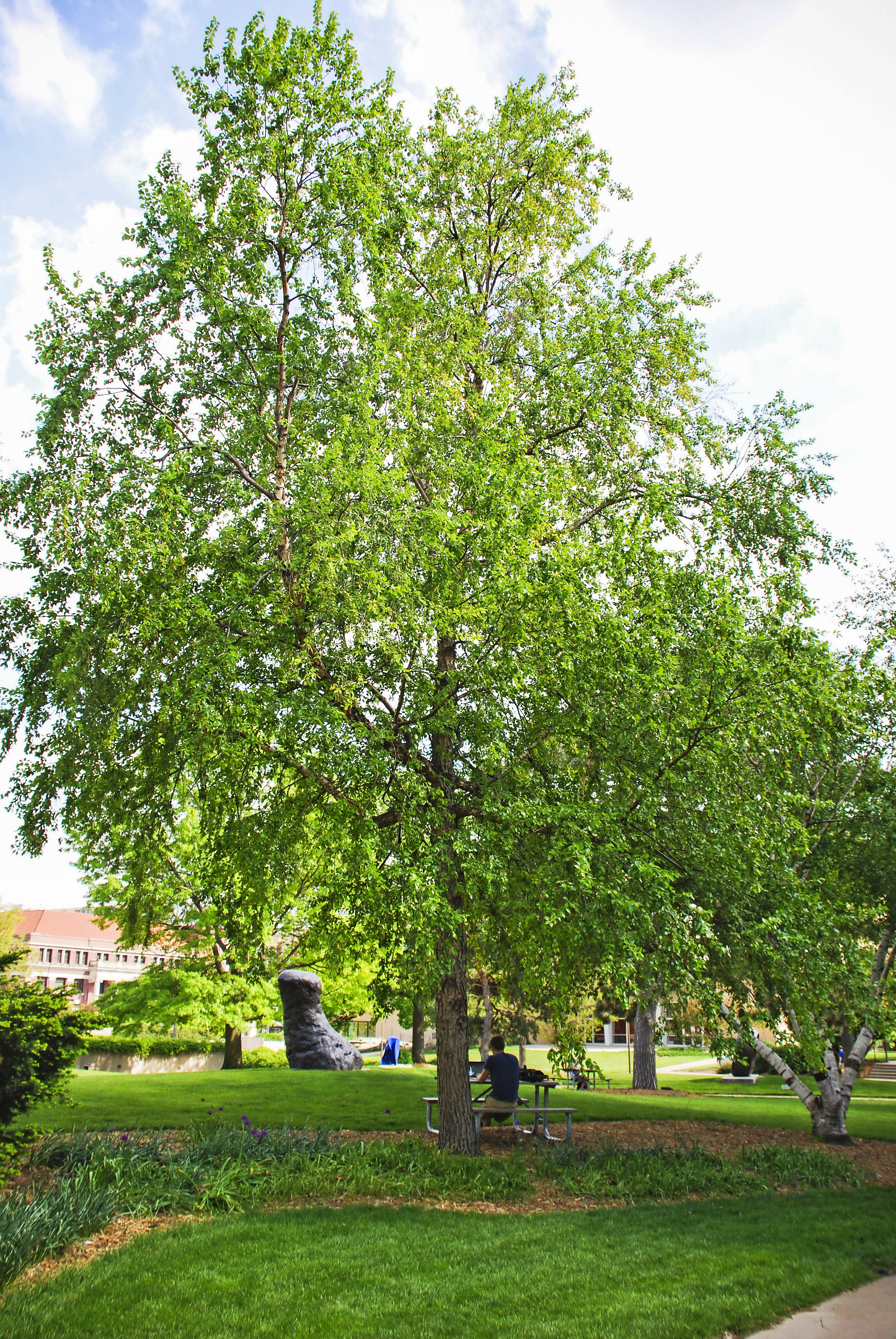 Top 10 Fast Growing Trees | Birds & Blooms Magazine
