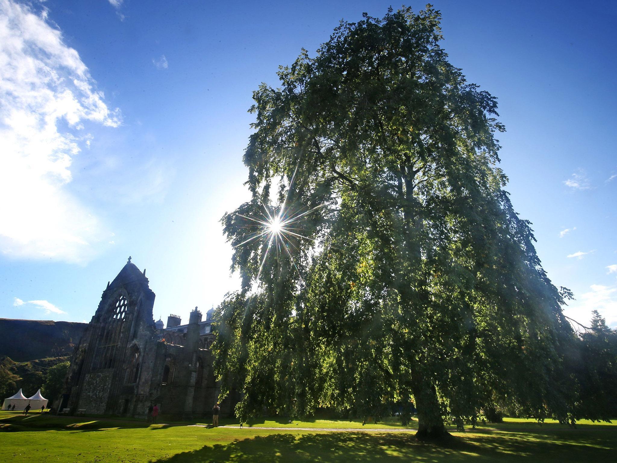 Extinct' species of tree found growing in Queen's garden | The ...