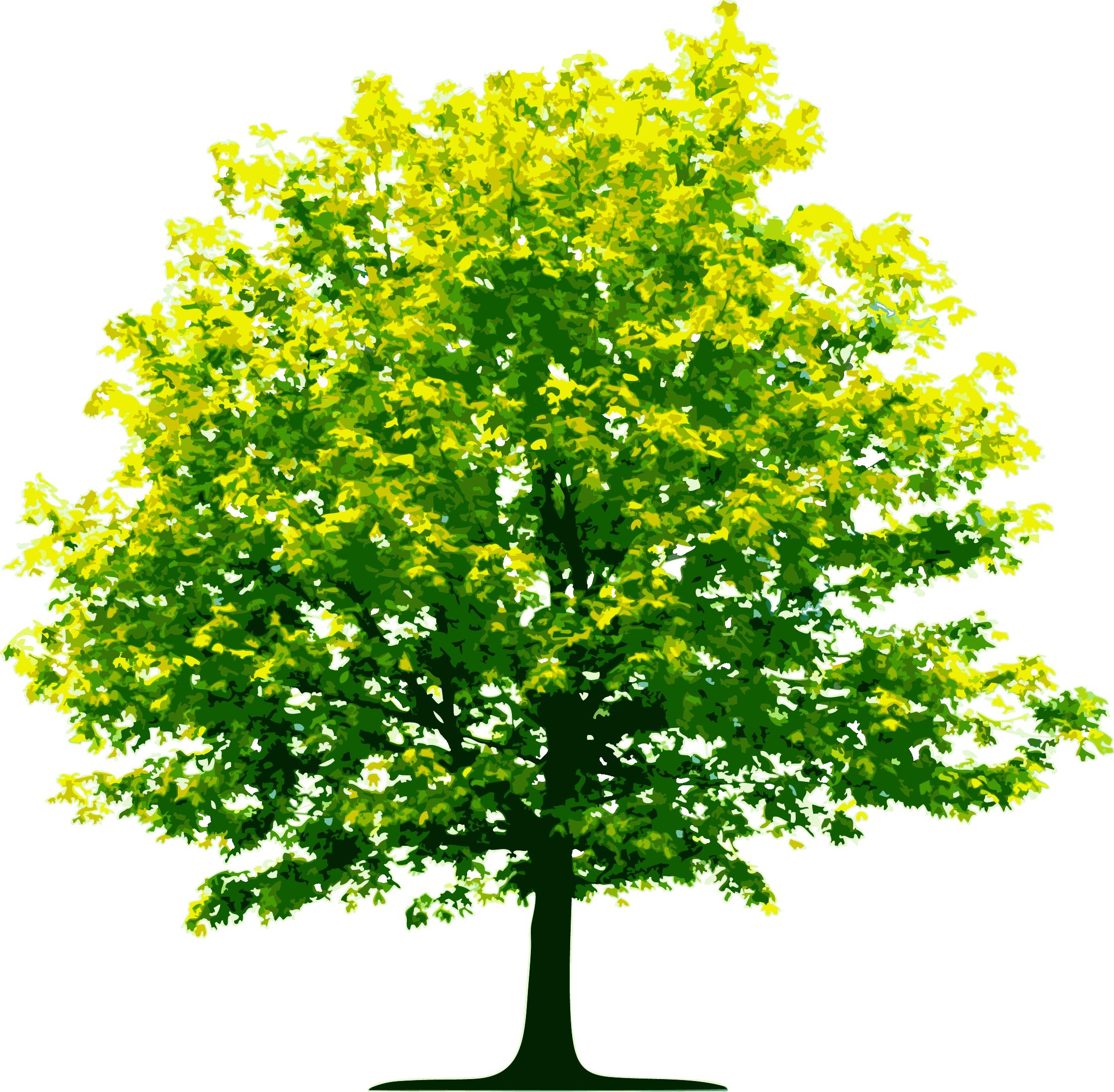 AAMU Tree Planting Wednesday