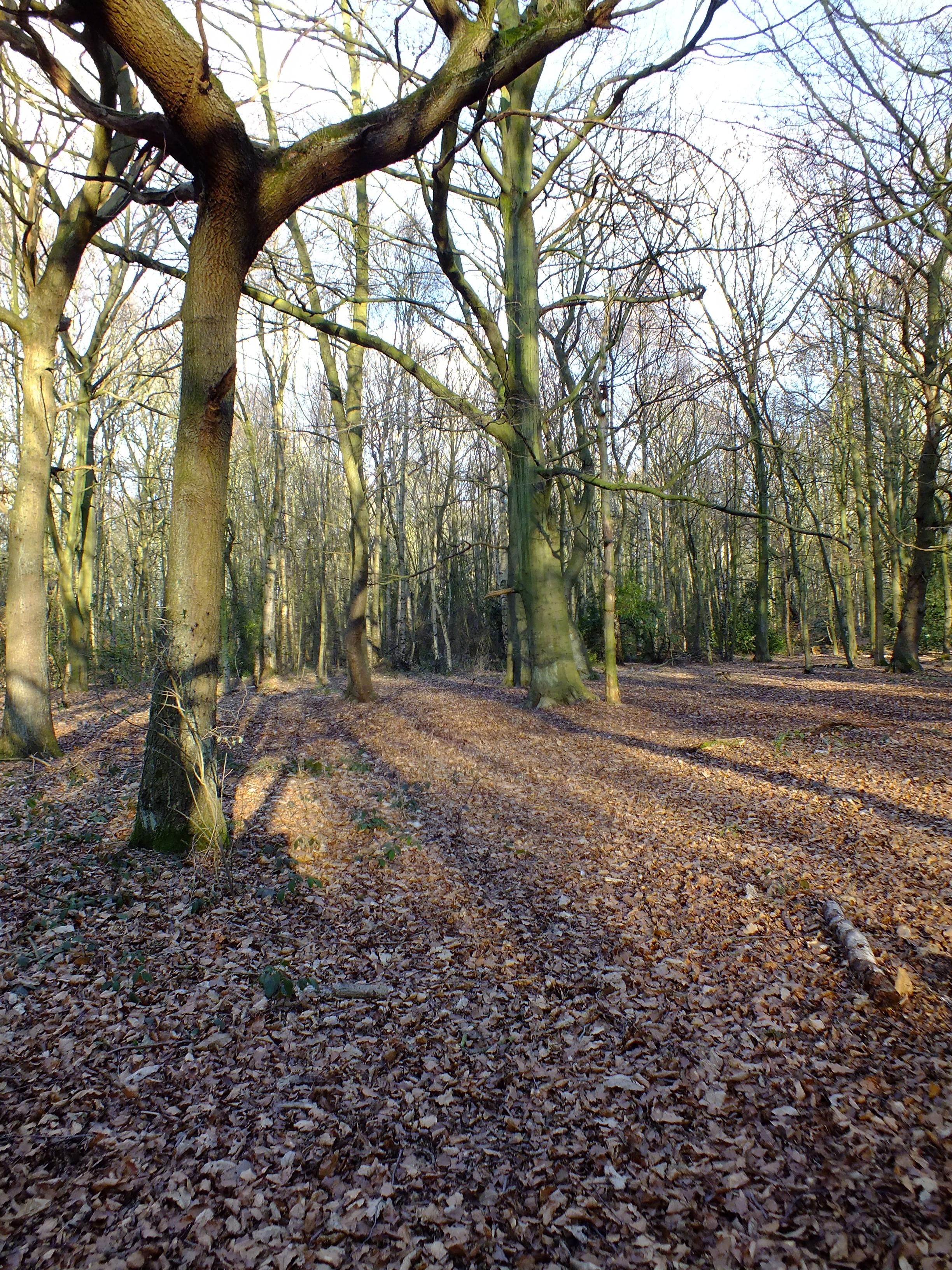Trees, Woods, HQ Photo