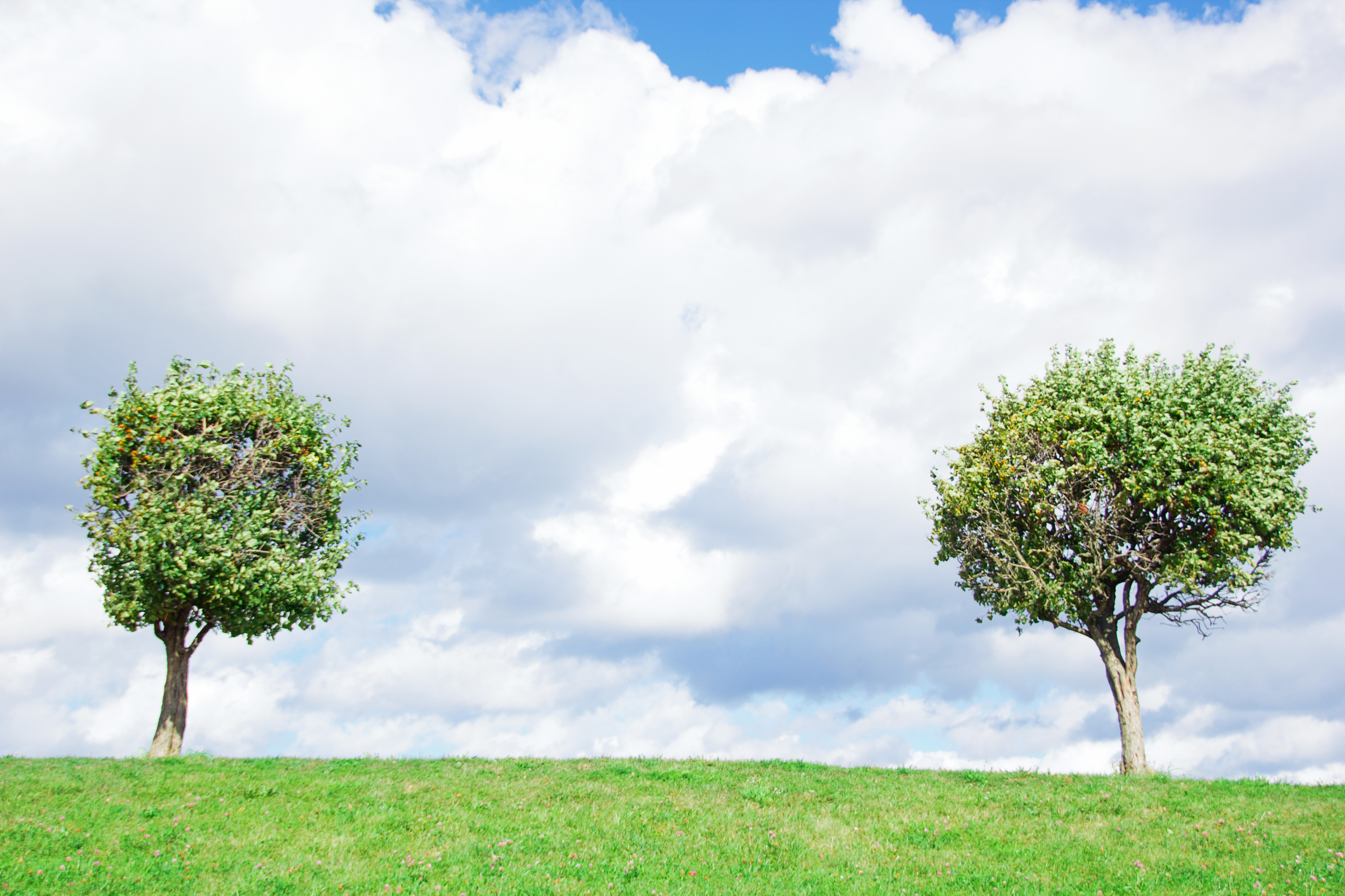 Trees, Branches, Couple, Leaf, Sky, HQ Photo