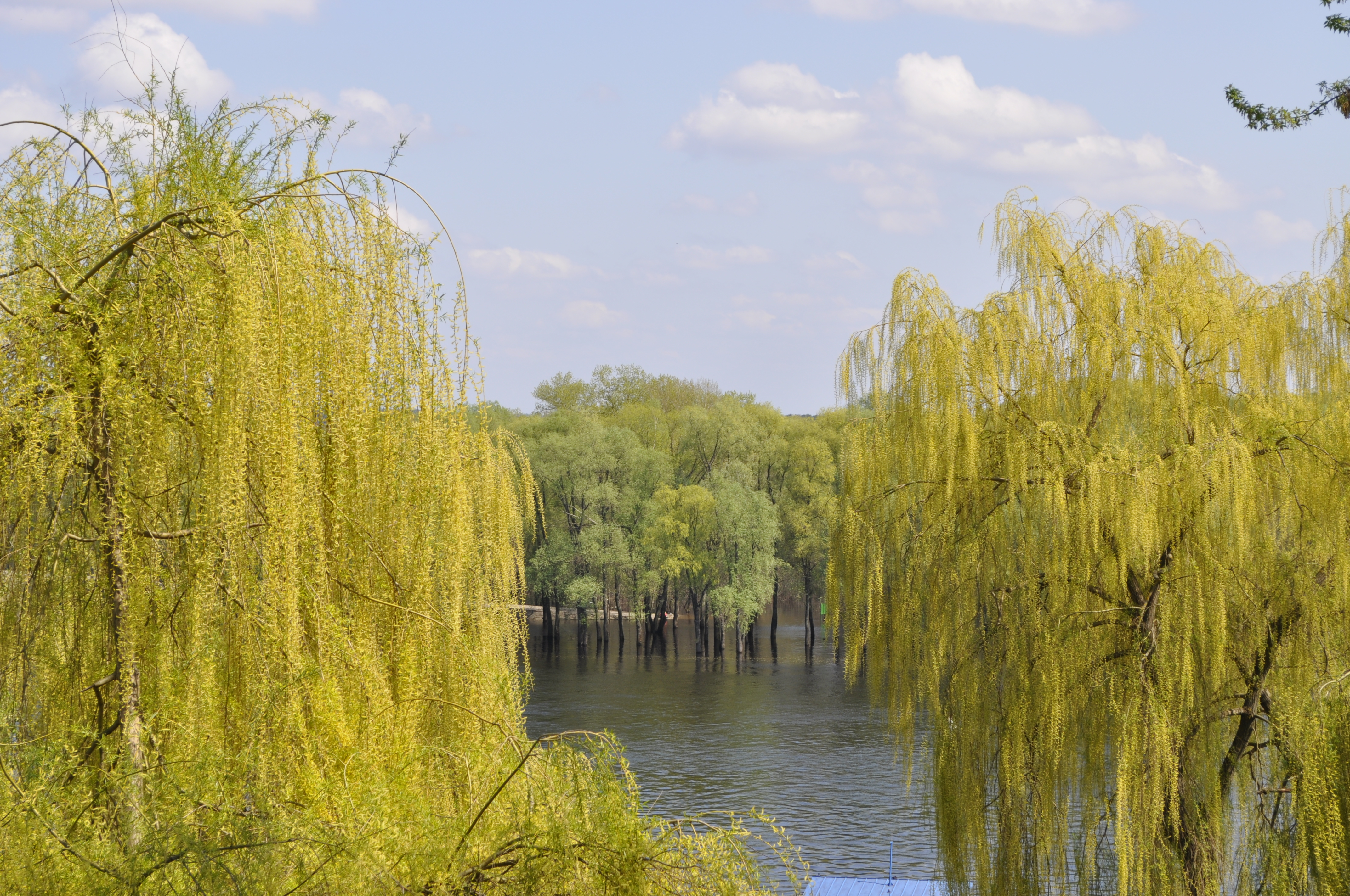 Trees, Landscape, Water, Yellow, HQ Photo