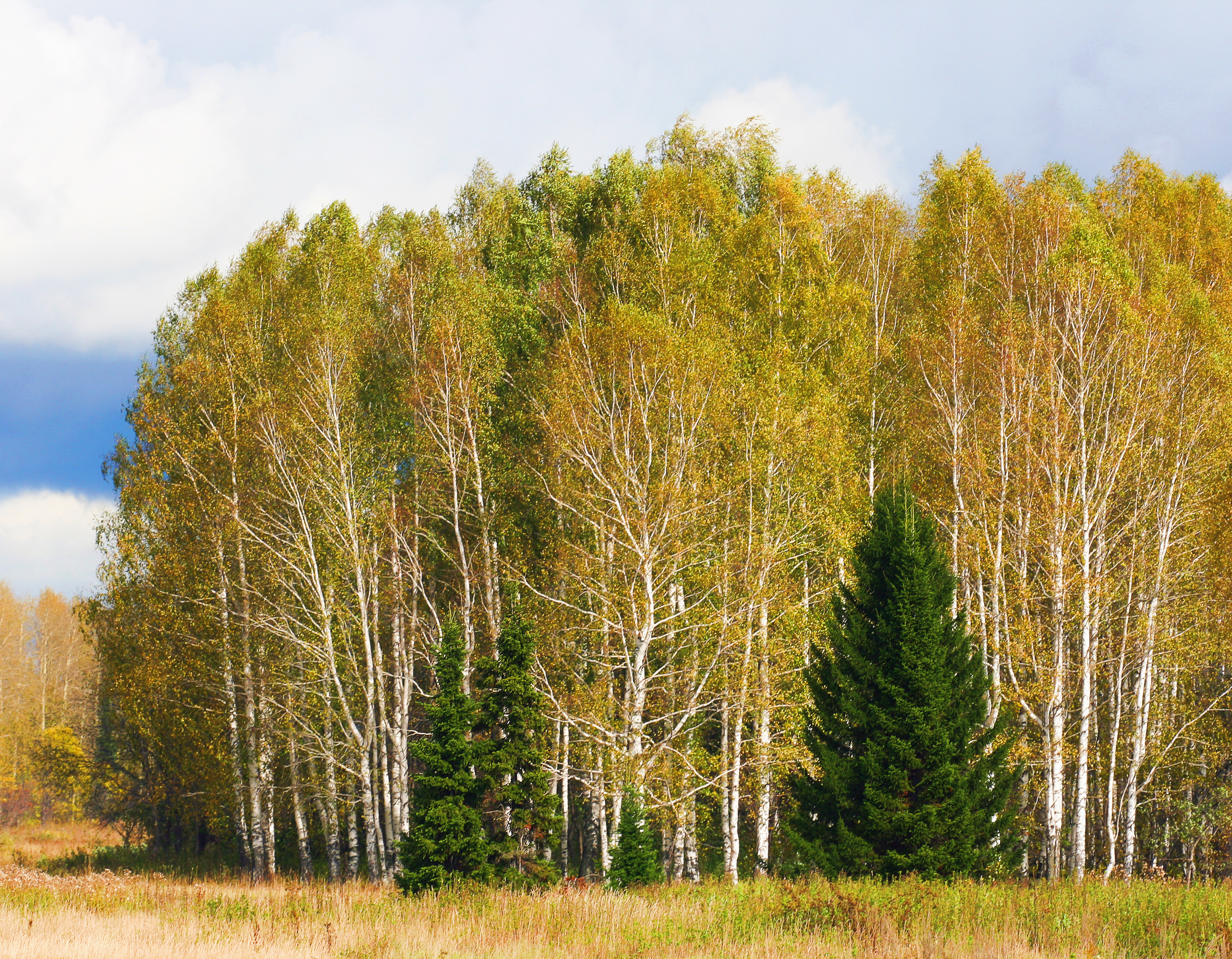 Trees, Forest, Green, Nature, Woods, HQ Photo