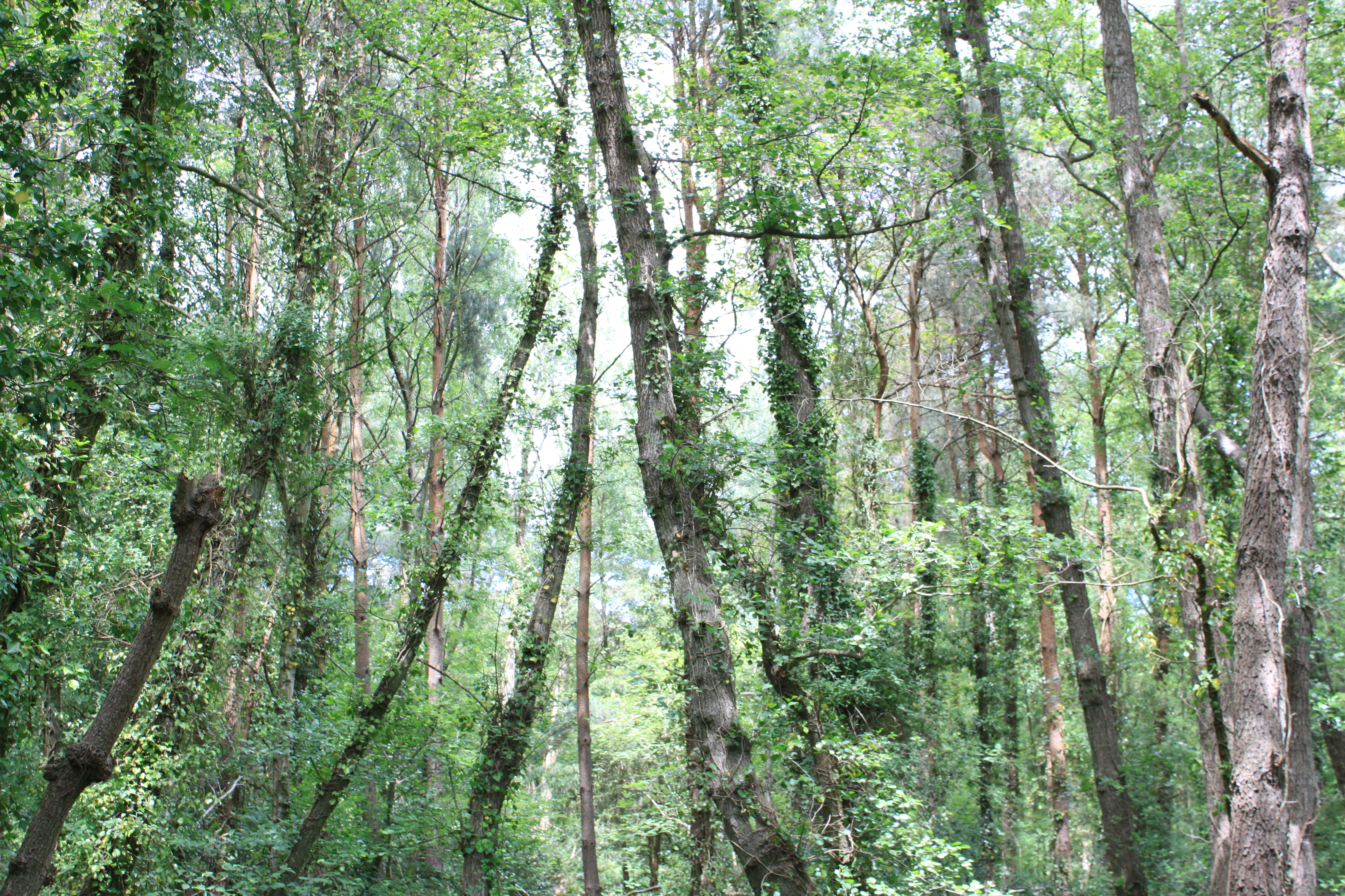 Trees, Forest, Green, Plants, Woods, HQ Photo