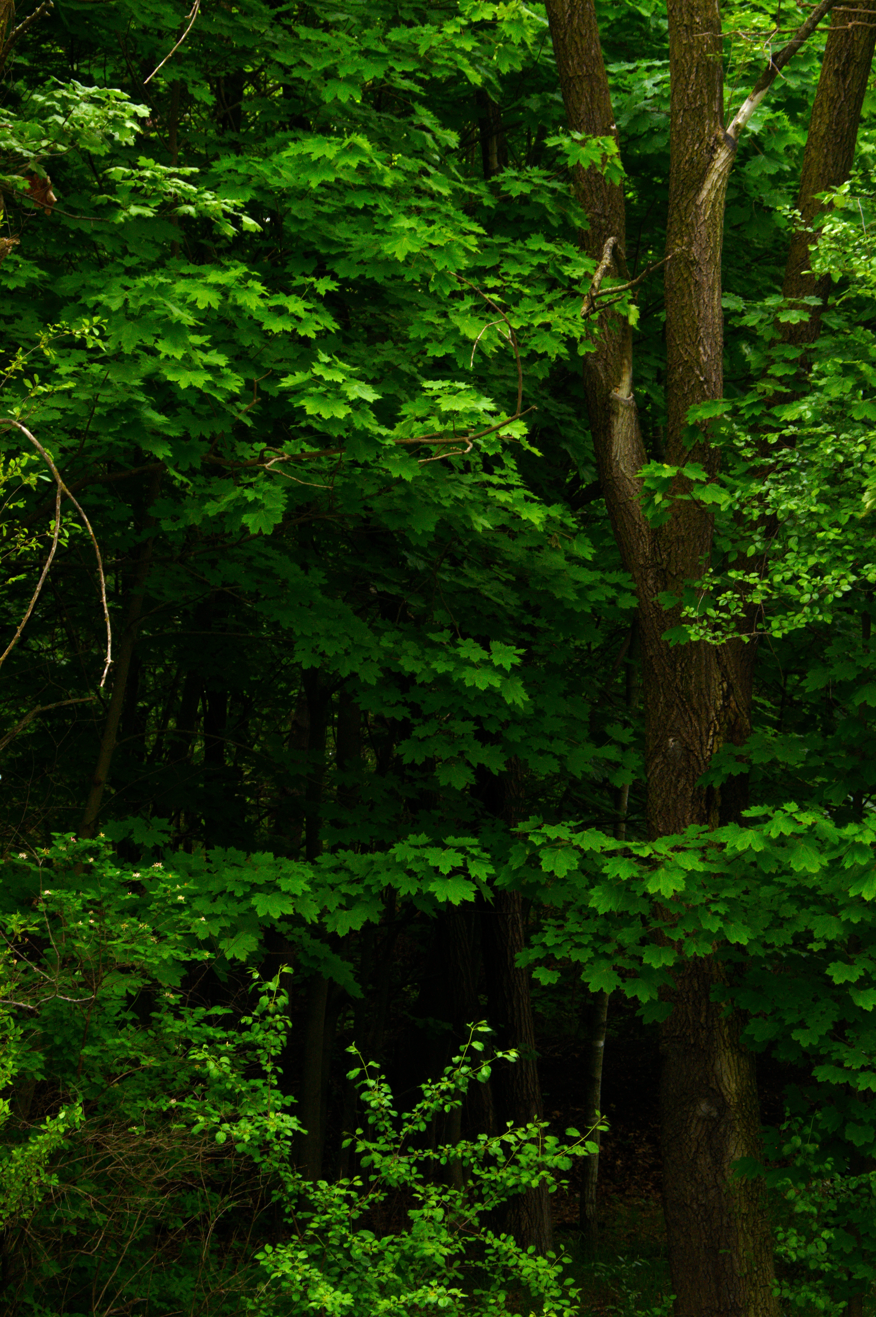 Trees, Forest, Green, Leaves, Nature, HQ Photo