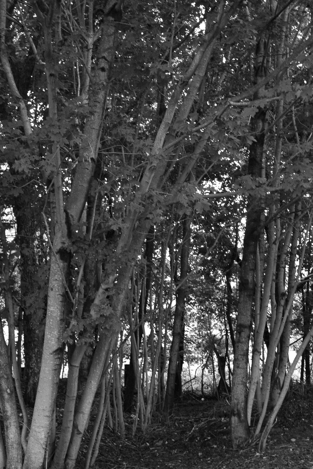 Trees, Branches, Bspo06, Forest, Woods, HQ Photo