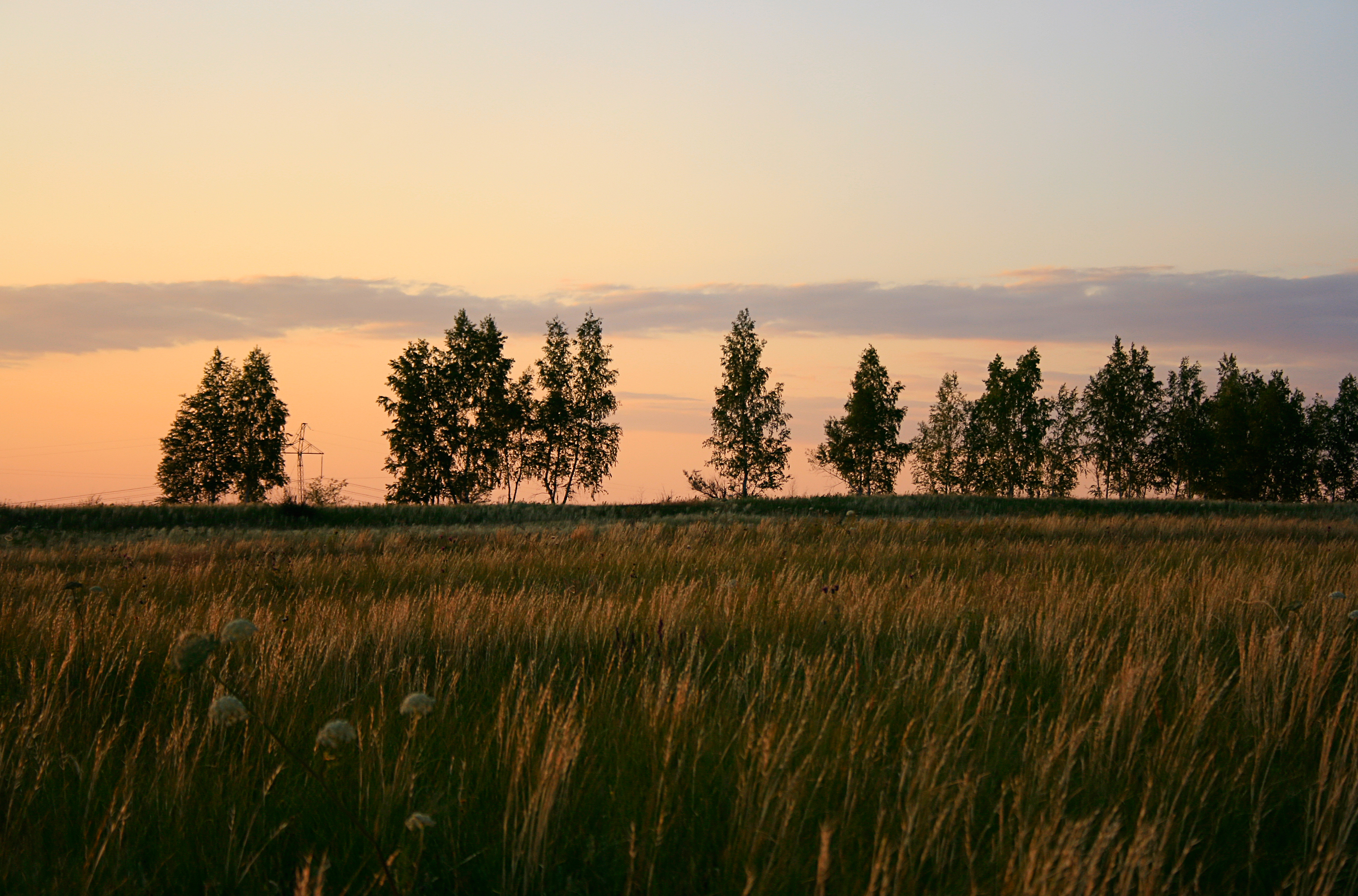 trees, Con2011, Countryside, Landscape, Nature, HQ Photo