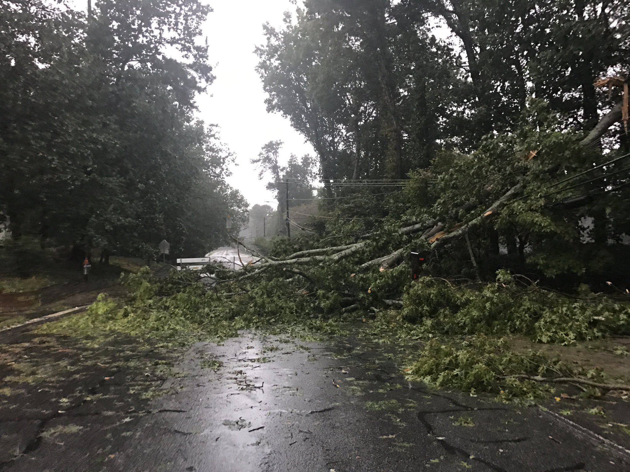 Dozens of trees, wires down in local cities after storm - Reporter ...