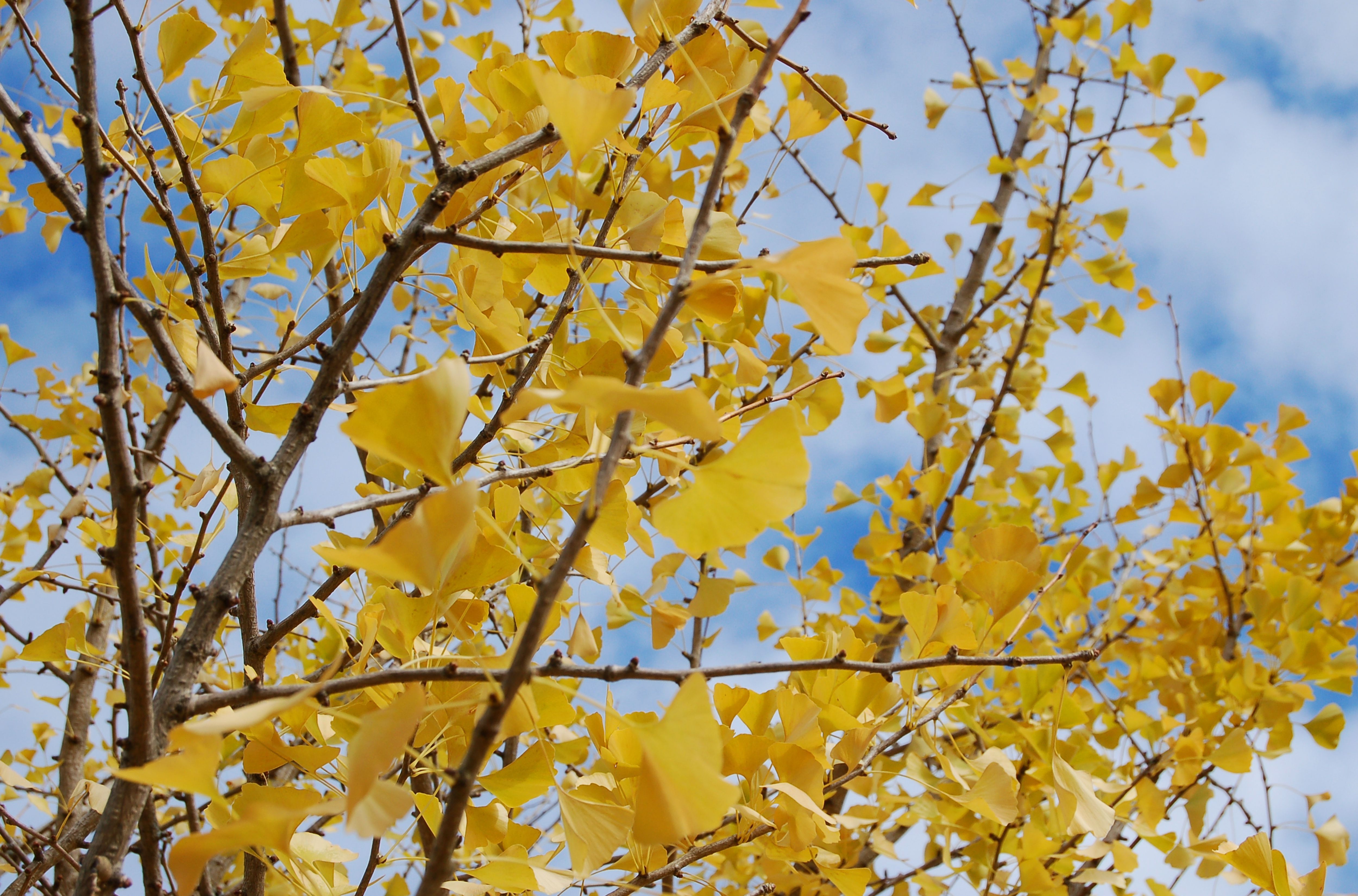 Watering Trees in Fall: Yay or Nay?
