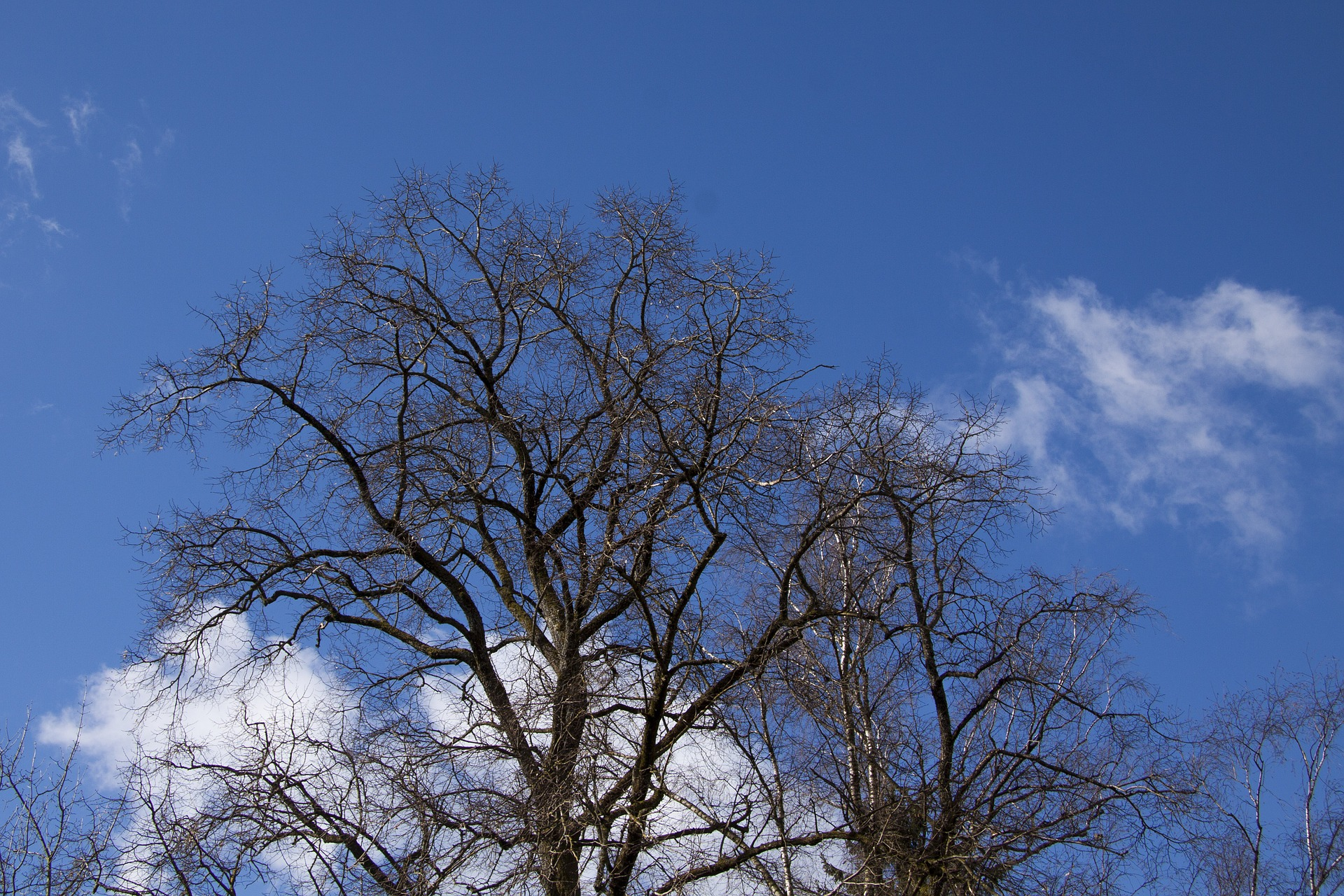 Trees after Fall, Dry, Fall, Fallen, Nature, HQ Photo