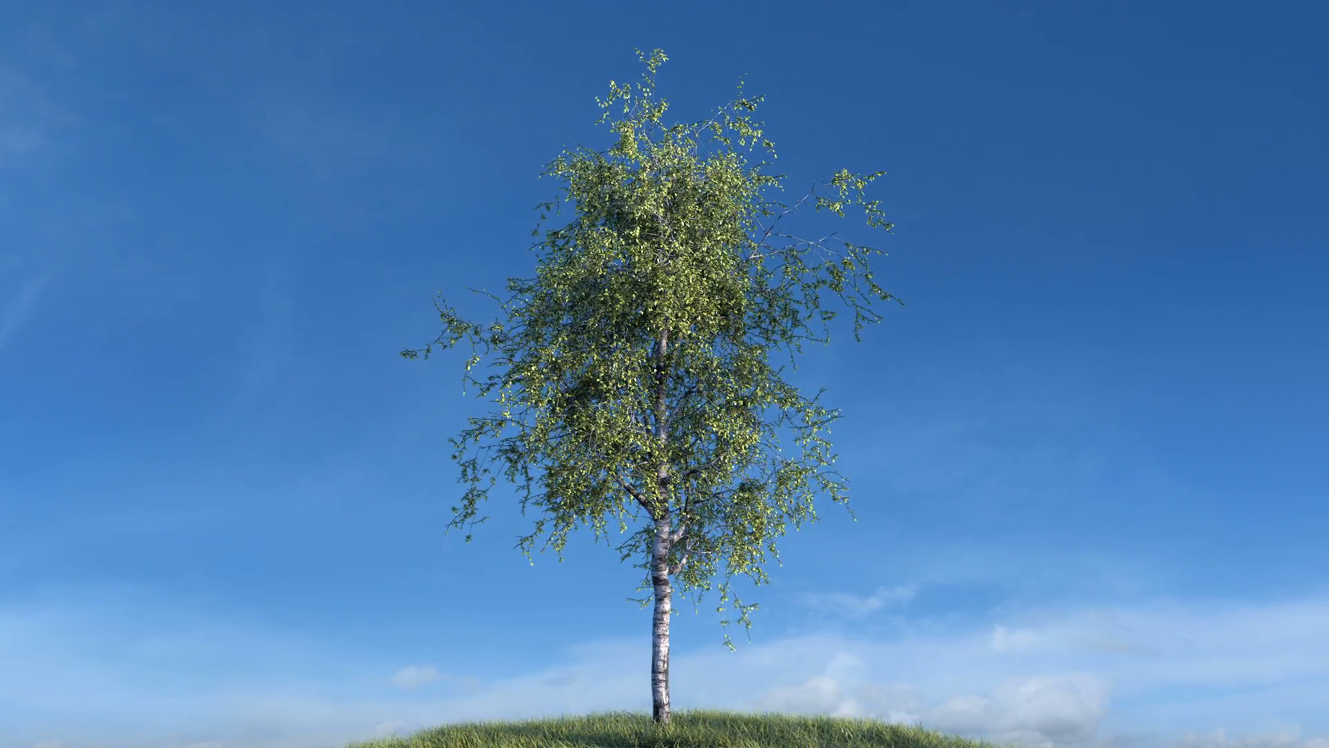 Growing birch tree against sky (with alpha matte, cg animation, full ...