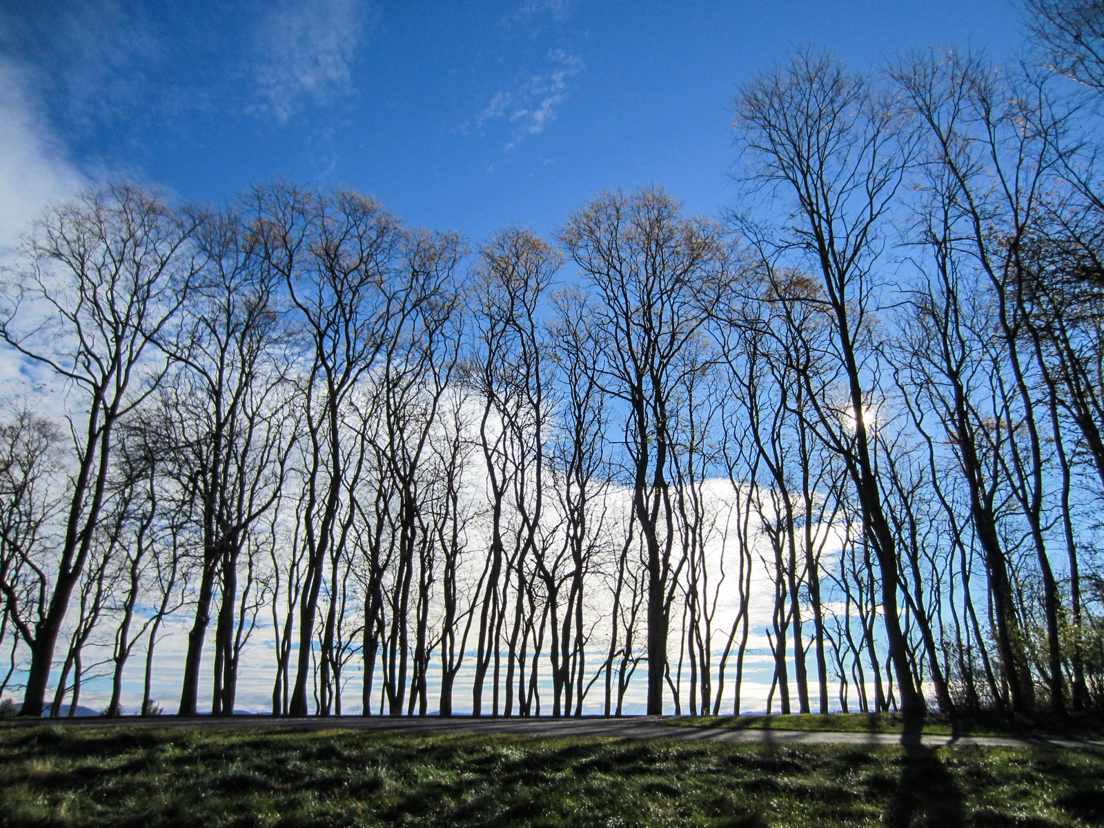 Skinny Trees Against a Blue Fall Sky | Cuteness, in all its versatility