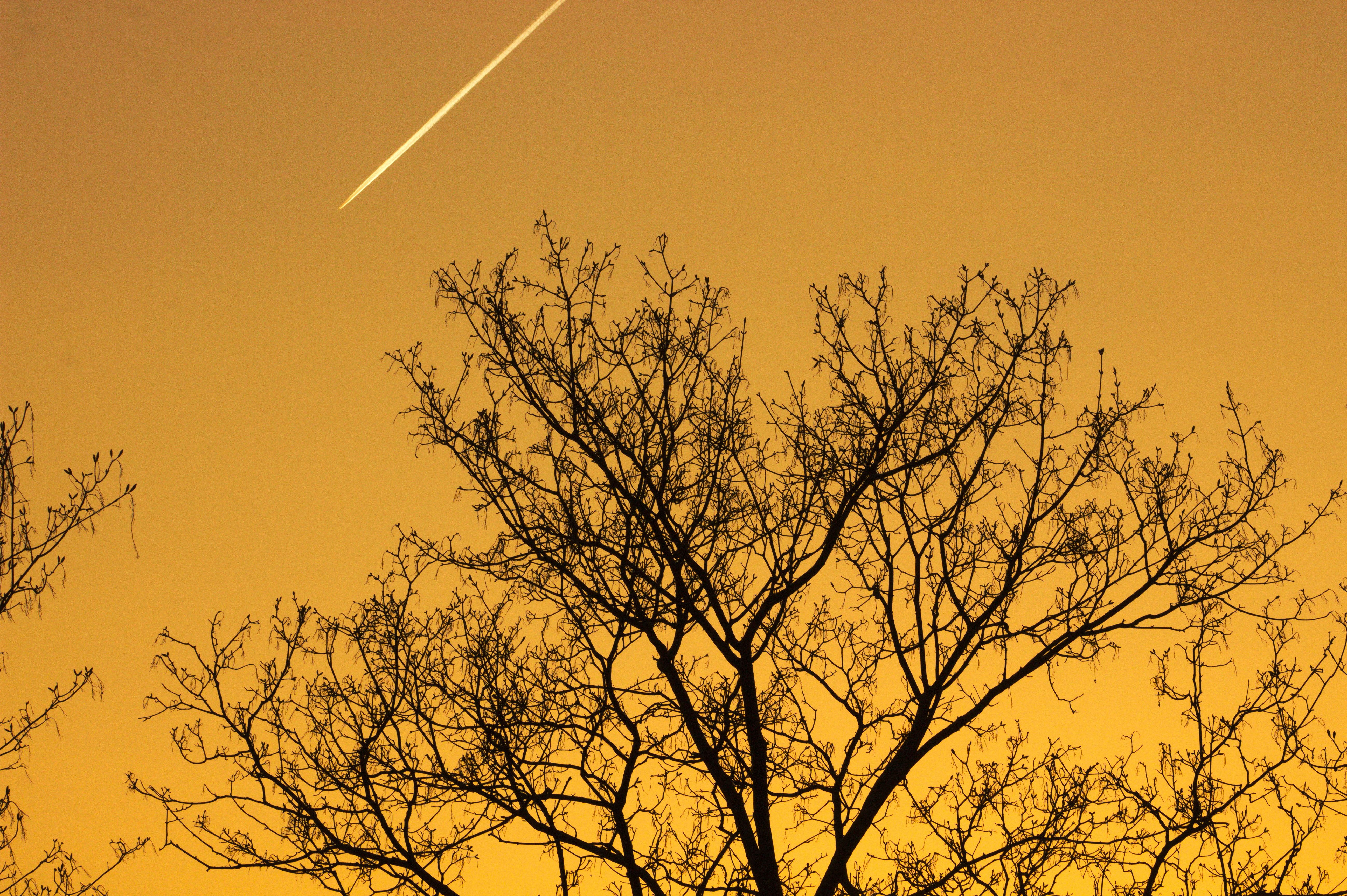 Trees against Sunset Sky, Emser Strasse, Wilmersdorf, Sky, Tree, HQ Photo
