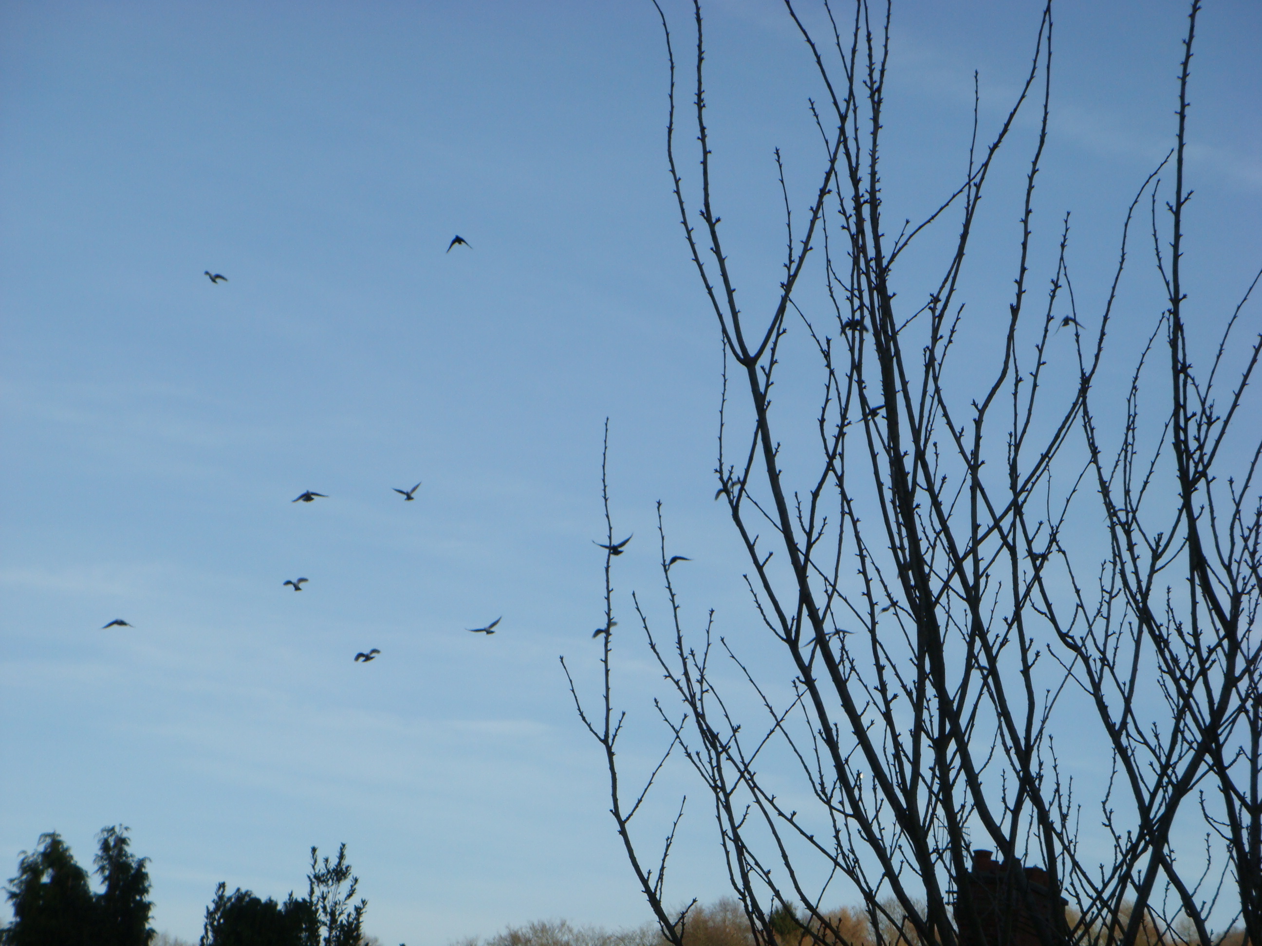 Trees and birds, Birds, Fly, Forest, Nature, HQ Photo