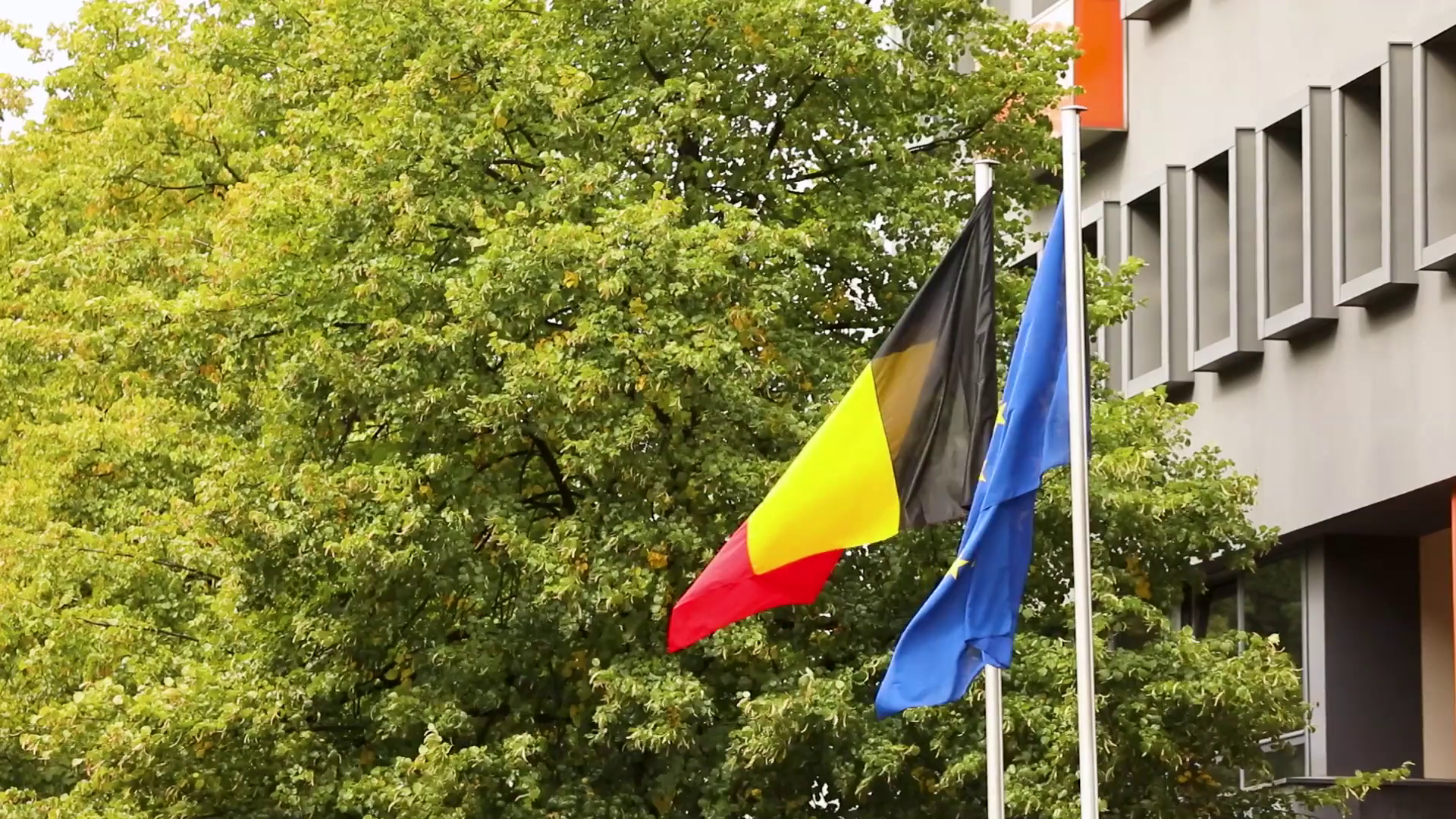 The european flag and the national german flag of germany with trees ...