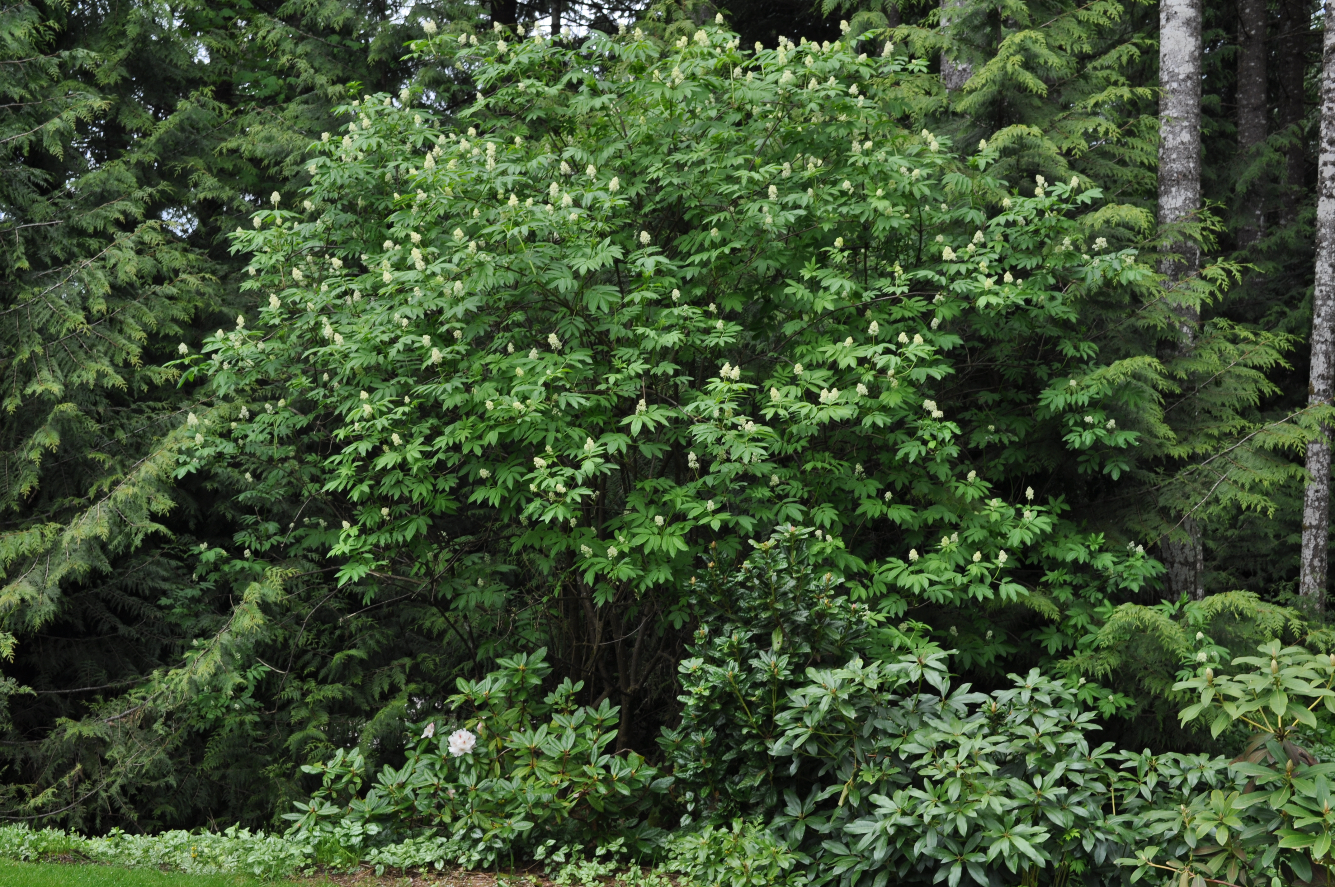 Bushes For Your Garden | Trees and Bushes | Pinterest | Shrub ...