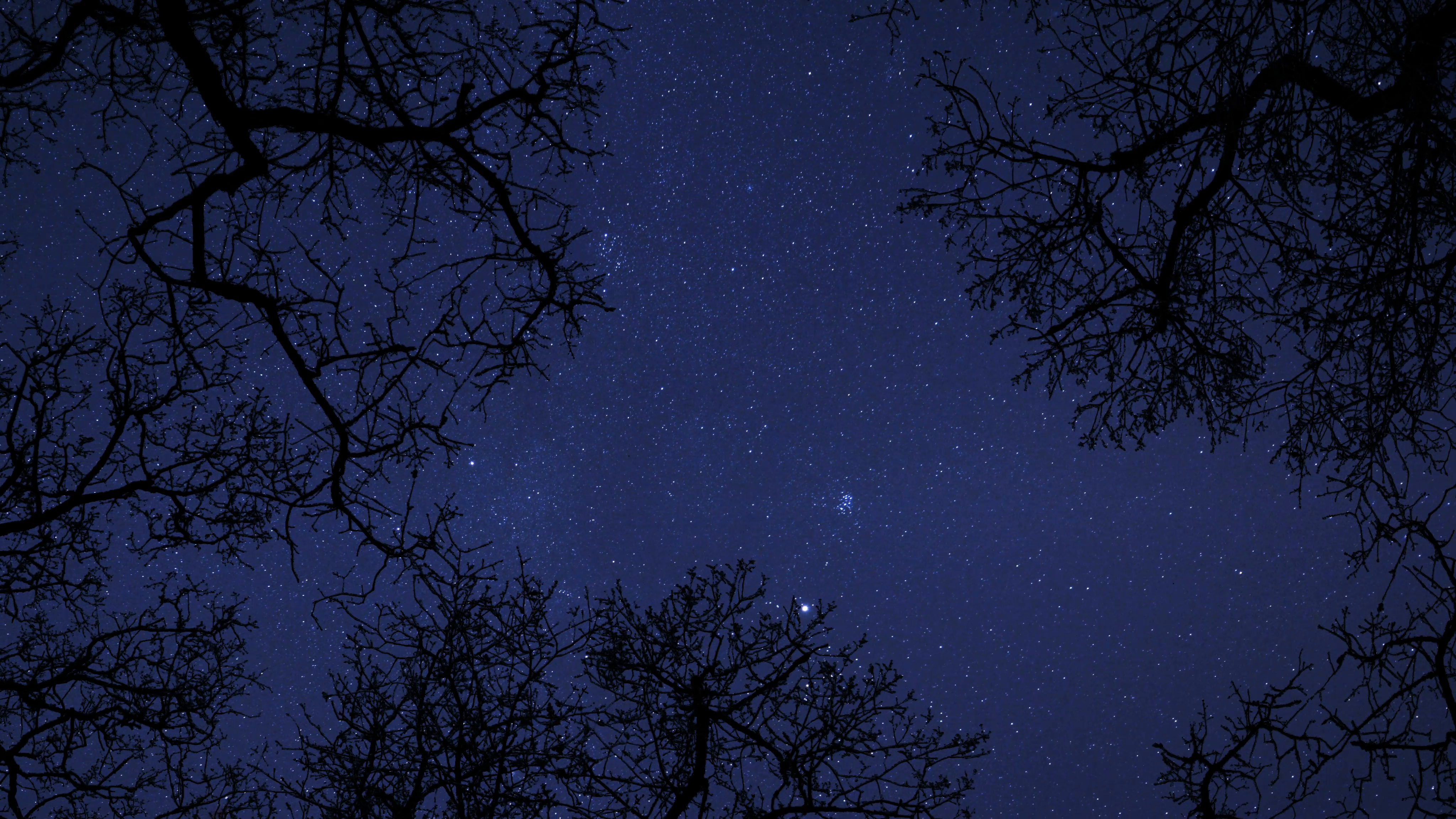 night sky stars between trees time lapse 4k UHD 10863 Stock Video ...
