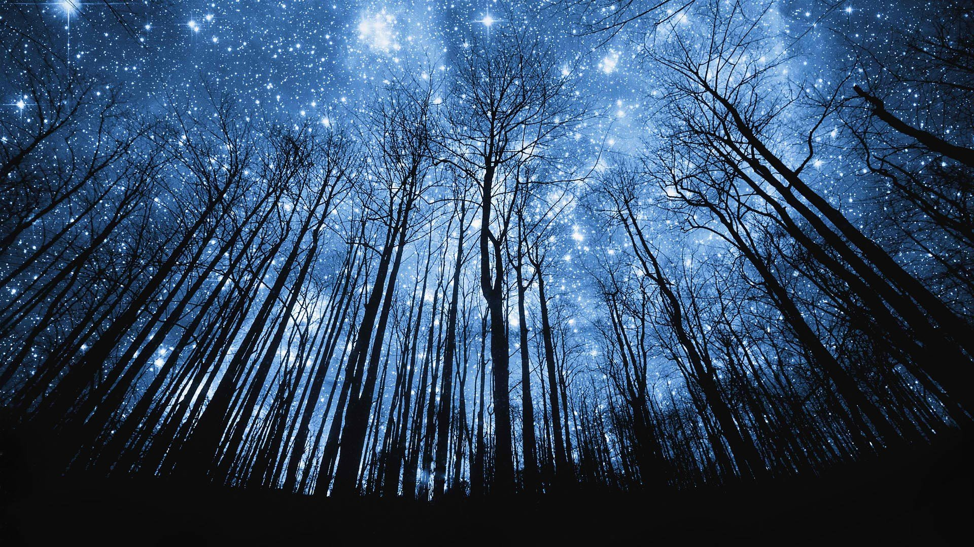 Night Stars Forests Trees - WallDevil
