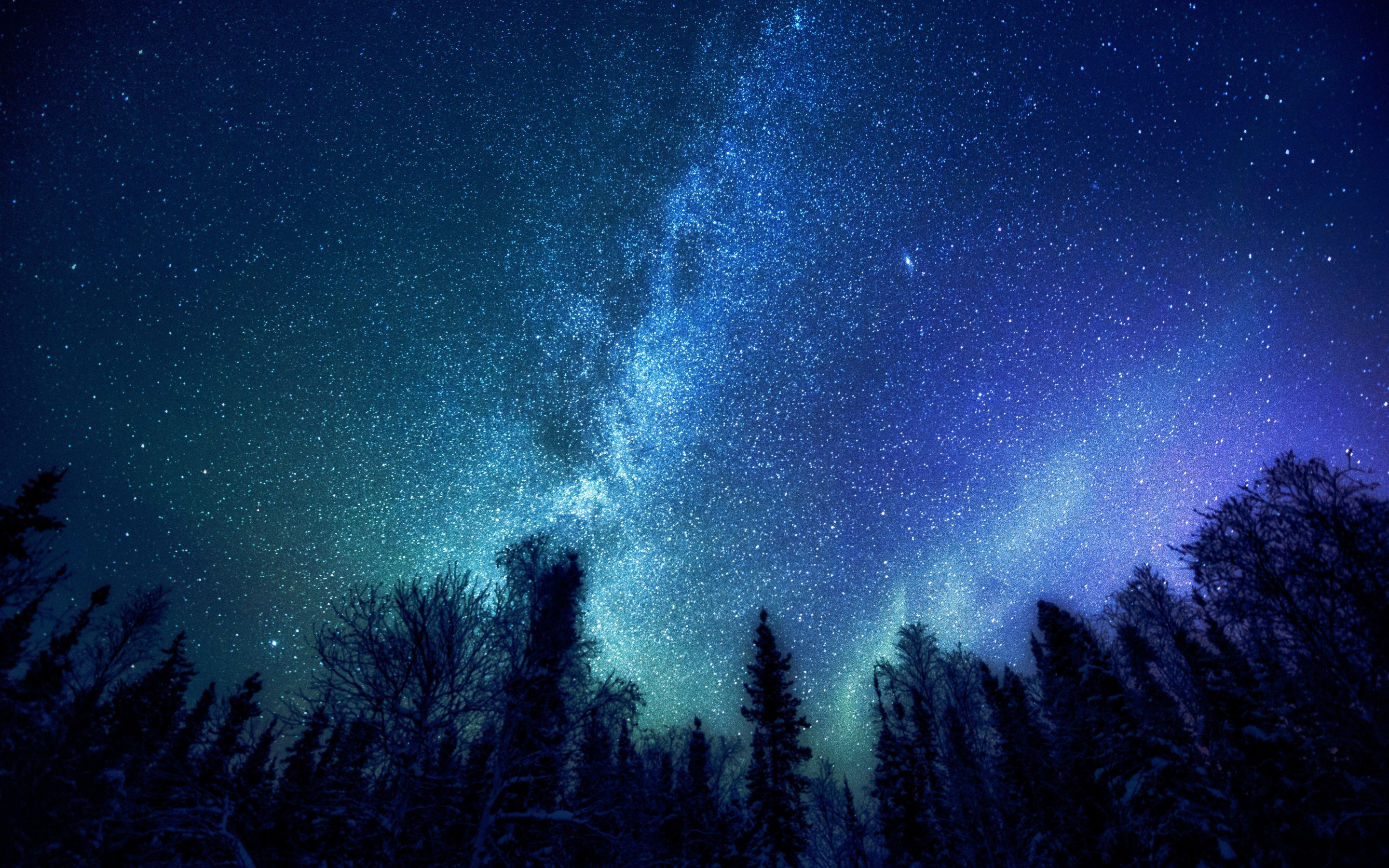trees, Nature, Stars, Milky Way Wallpapers HD / Desktop and Mobile ...